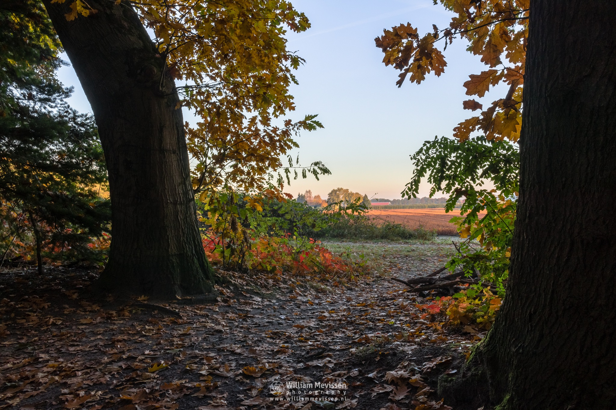 Fall Forest Gate by William Mevissen