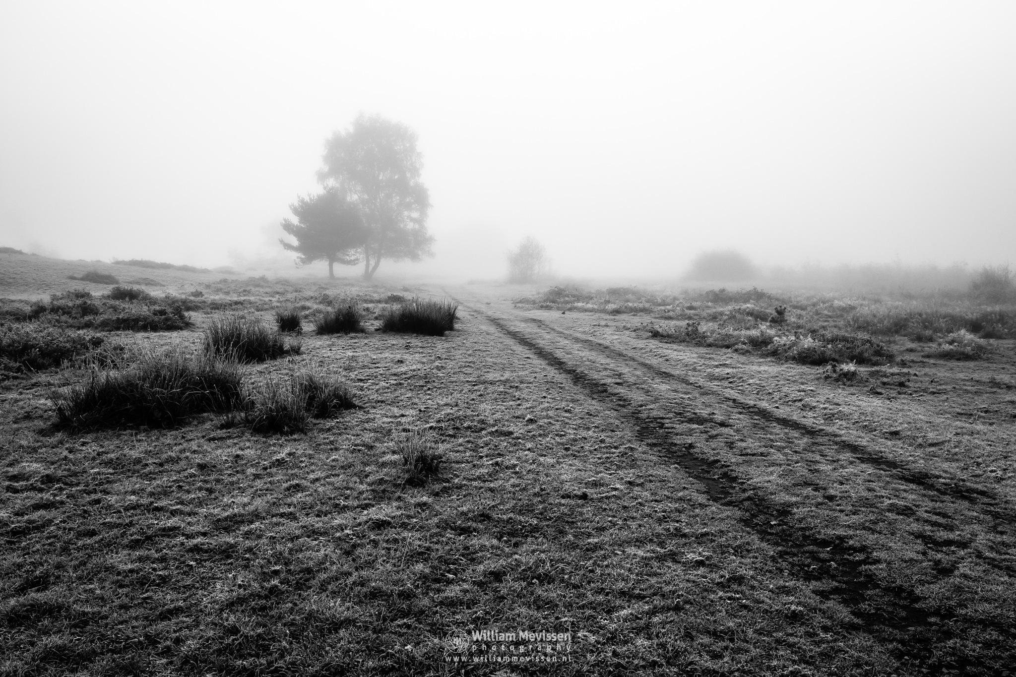 Frosty Autumn Path by William Mevissen