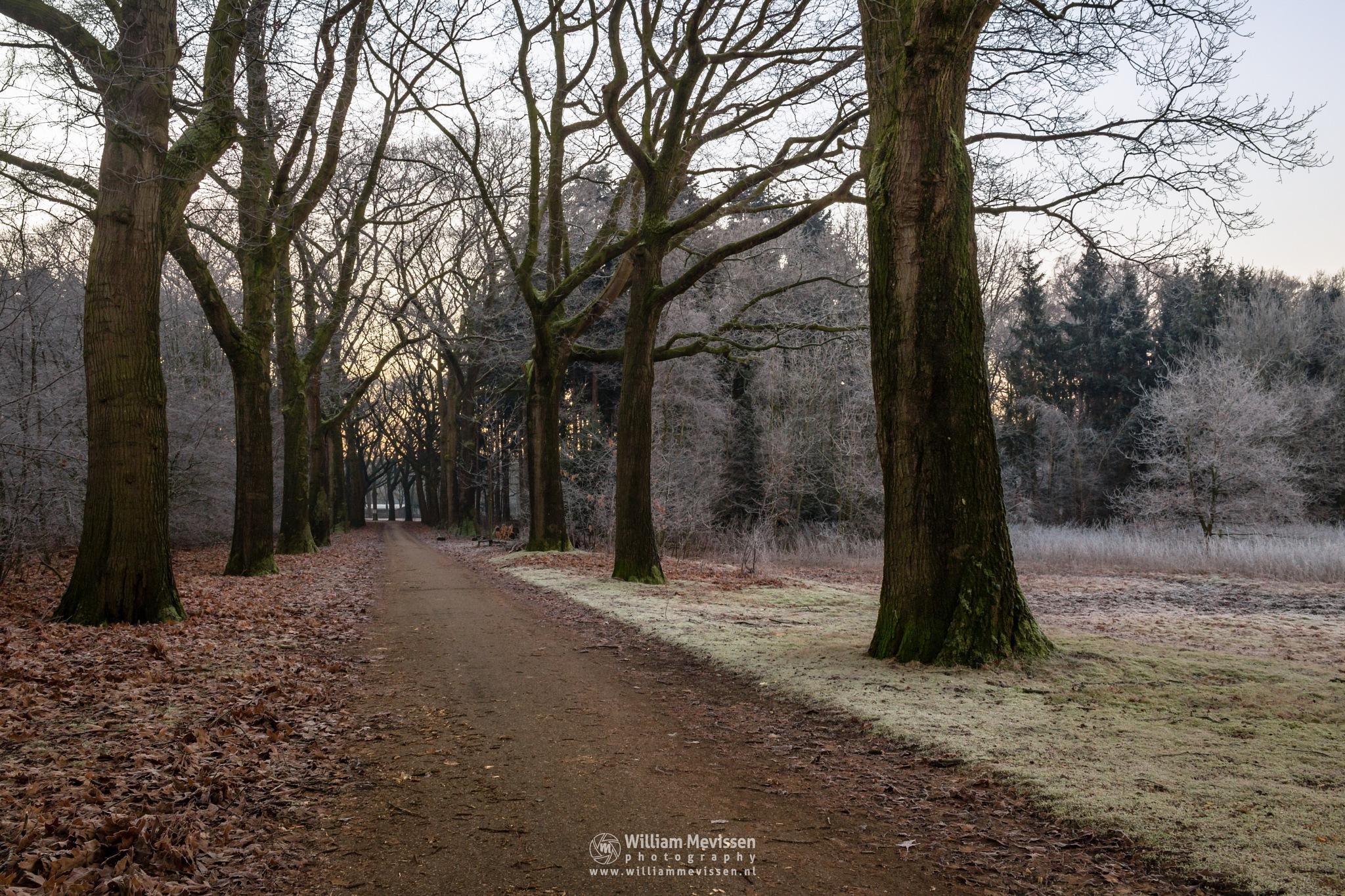 Frosty Lane by William Mevissen