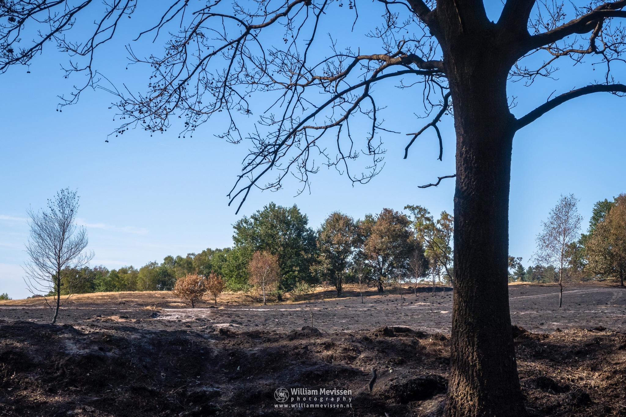Burned Land by William Mevissen