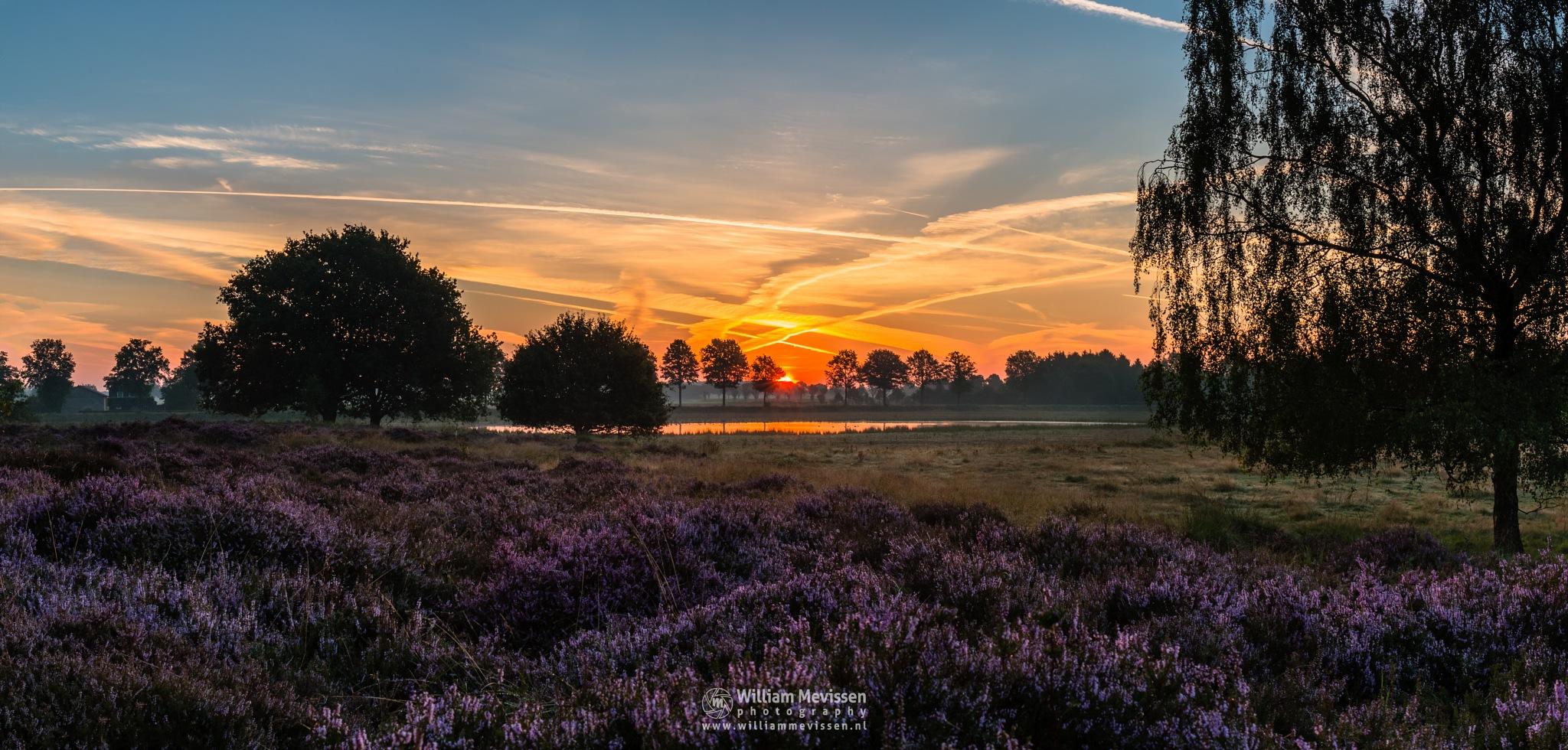 Panorama - Heather Sunrise by William Mevissen