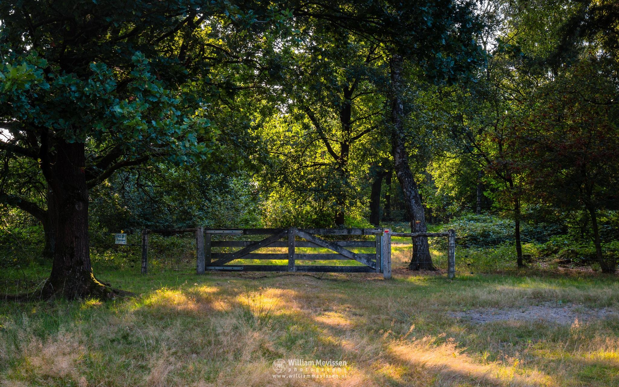 Photo in Nature #forest #woods #maasduinen #limburg #noord-limburg #nieuw-bergen #bergen #national park #nature #light #land #trees #ceresweg #eckeltsebergen #sunrise #fence #gate