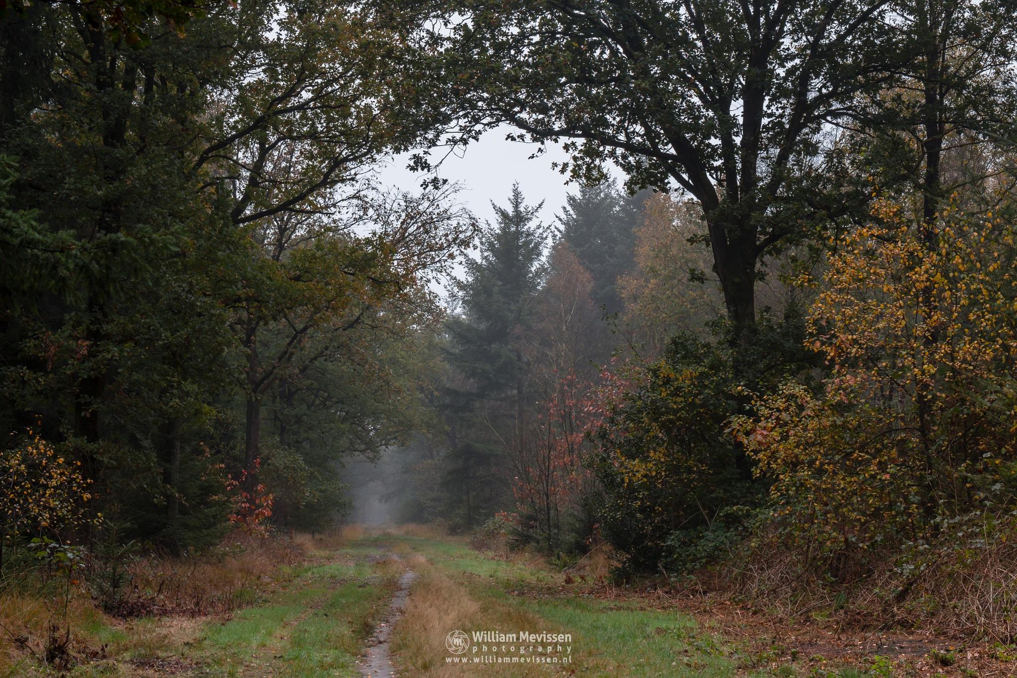 Autumn Forest by William Mevissen