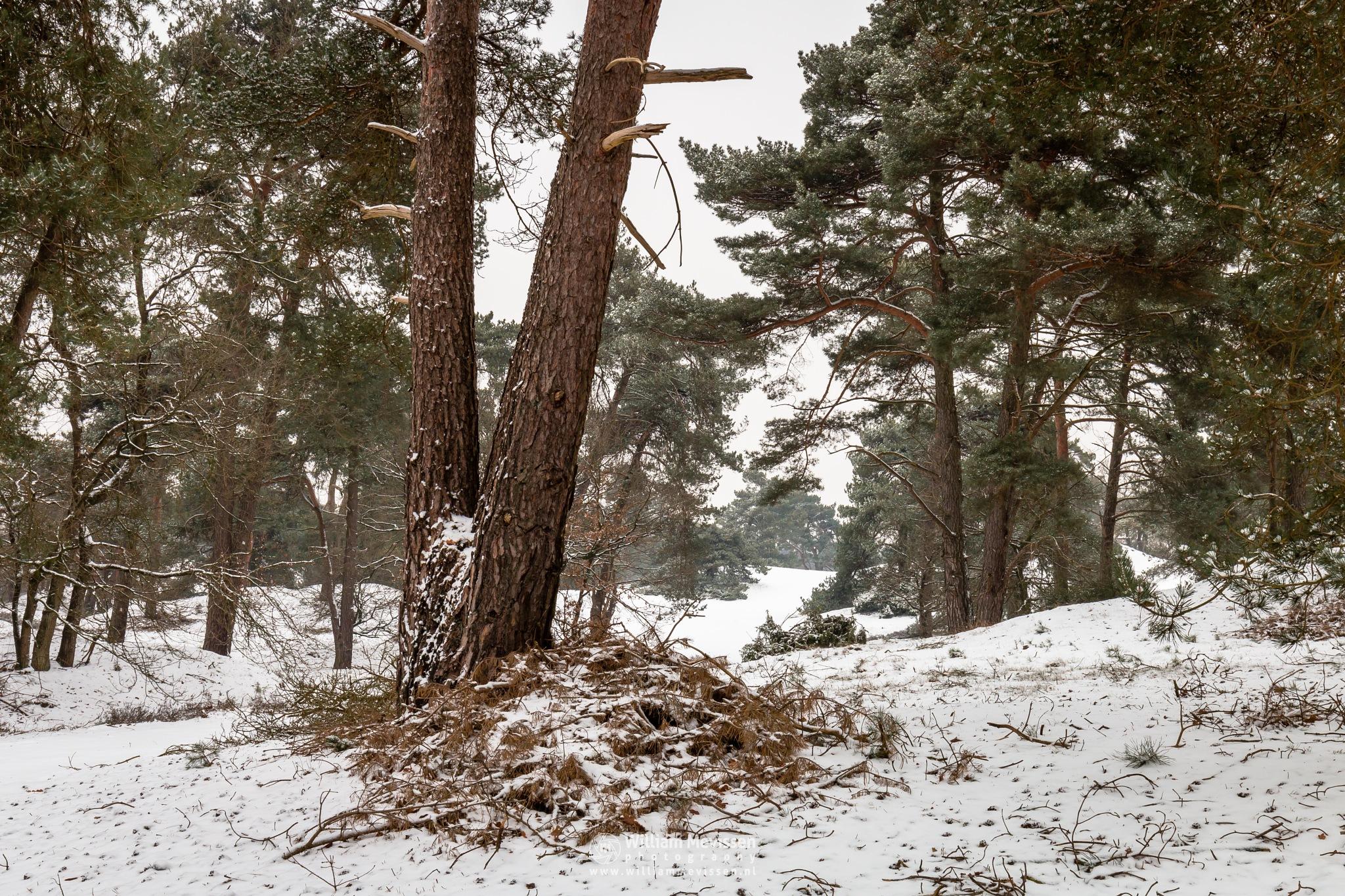 Winter Forest by William Mevissen