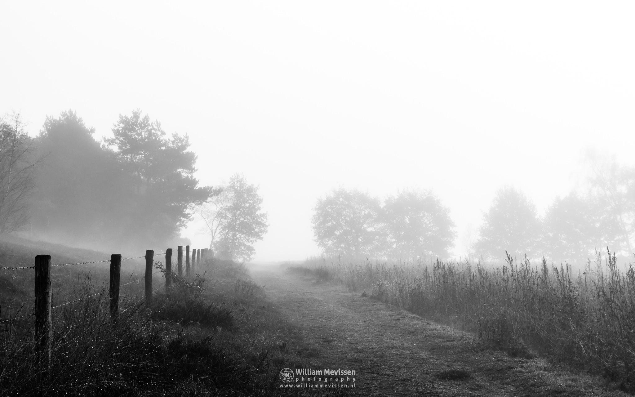 Fading Path Bergerheide by William Mevissen