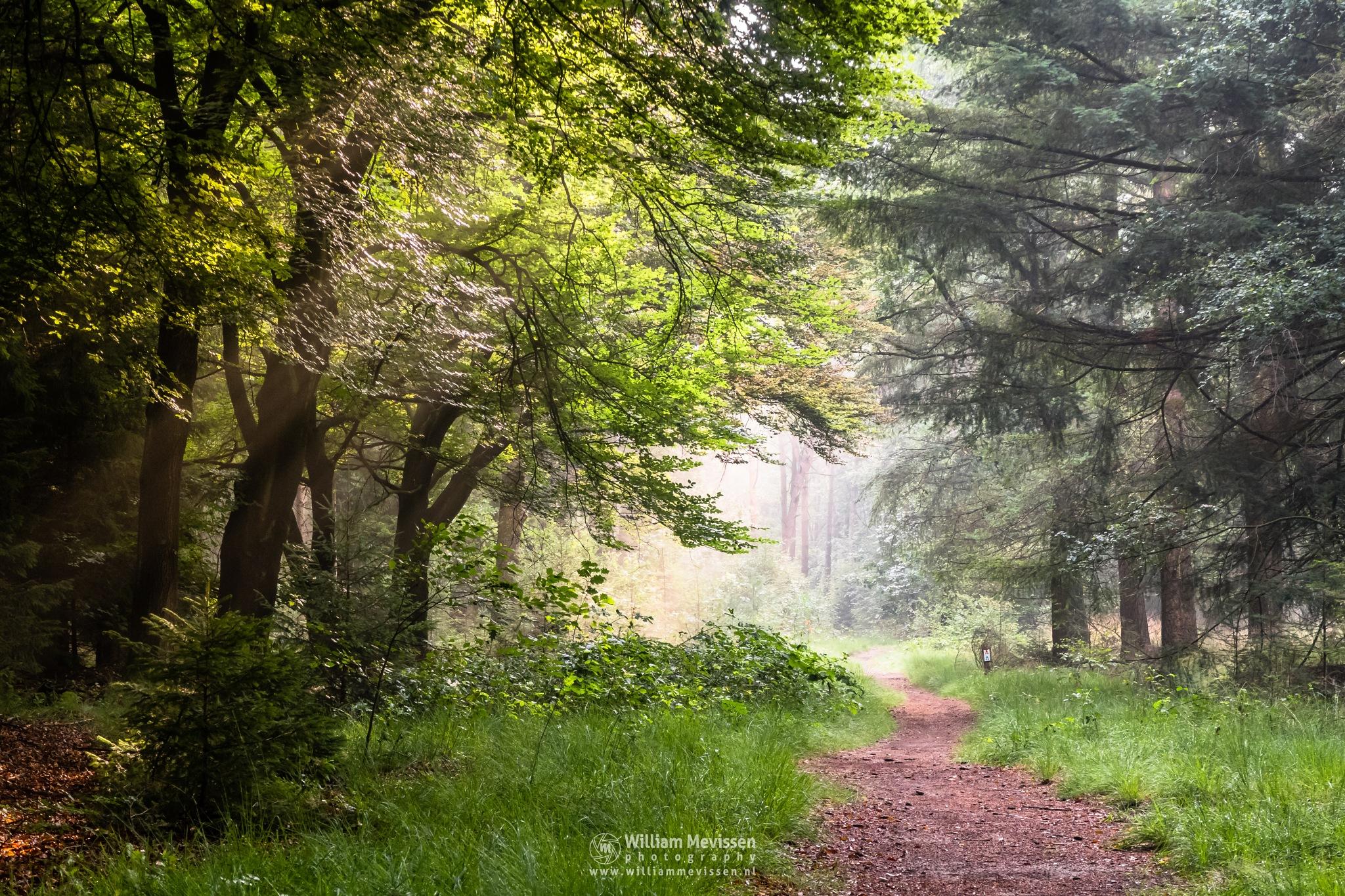 Into The Light by William Mevissen