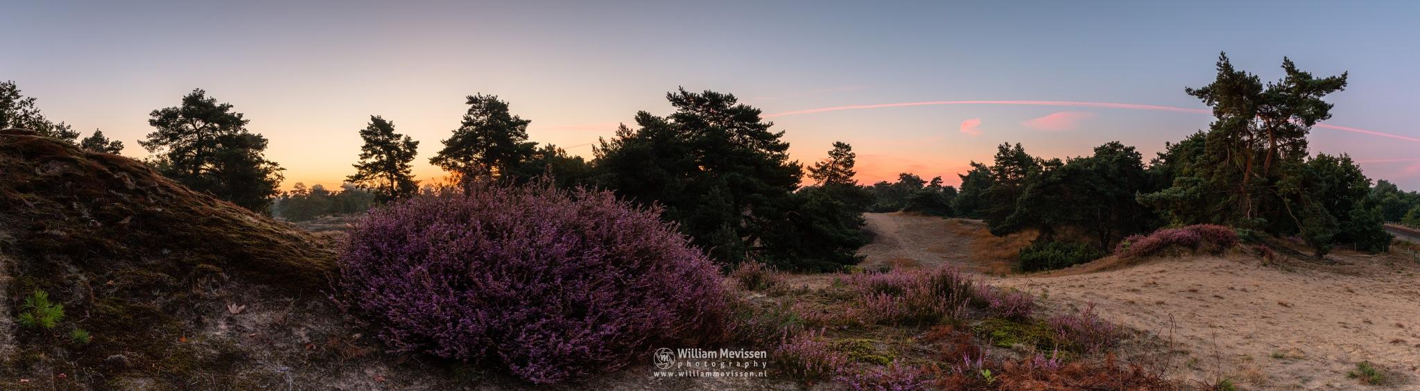 Panorama - Heather Twilight View by William Mevissen
