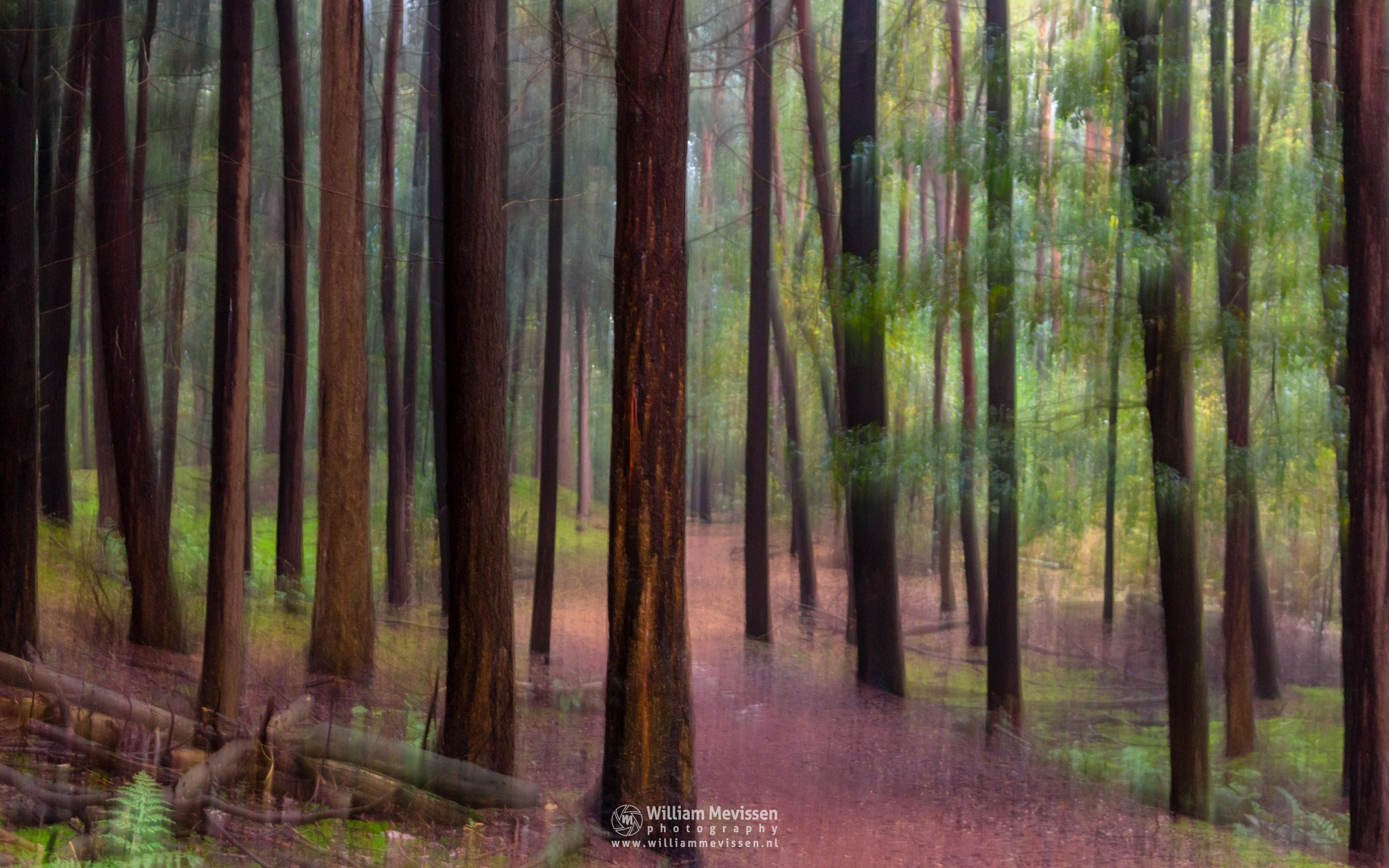 Photo in Abstract #trees #pine #forest #limburg #noord-limburg #venray #annaterrein #nature #green #autumn #light #mood #artistic