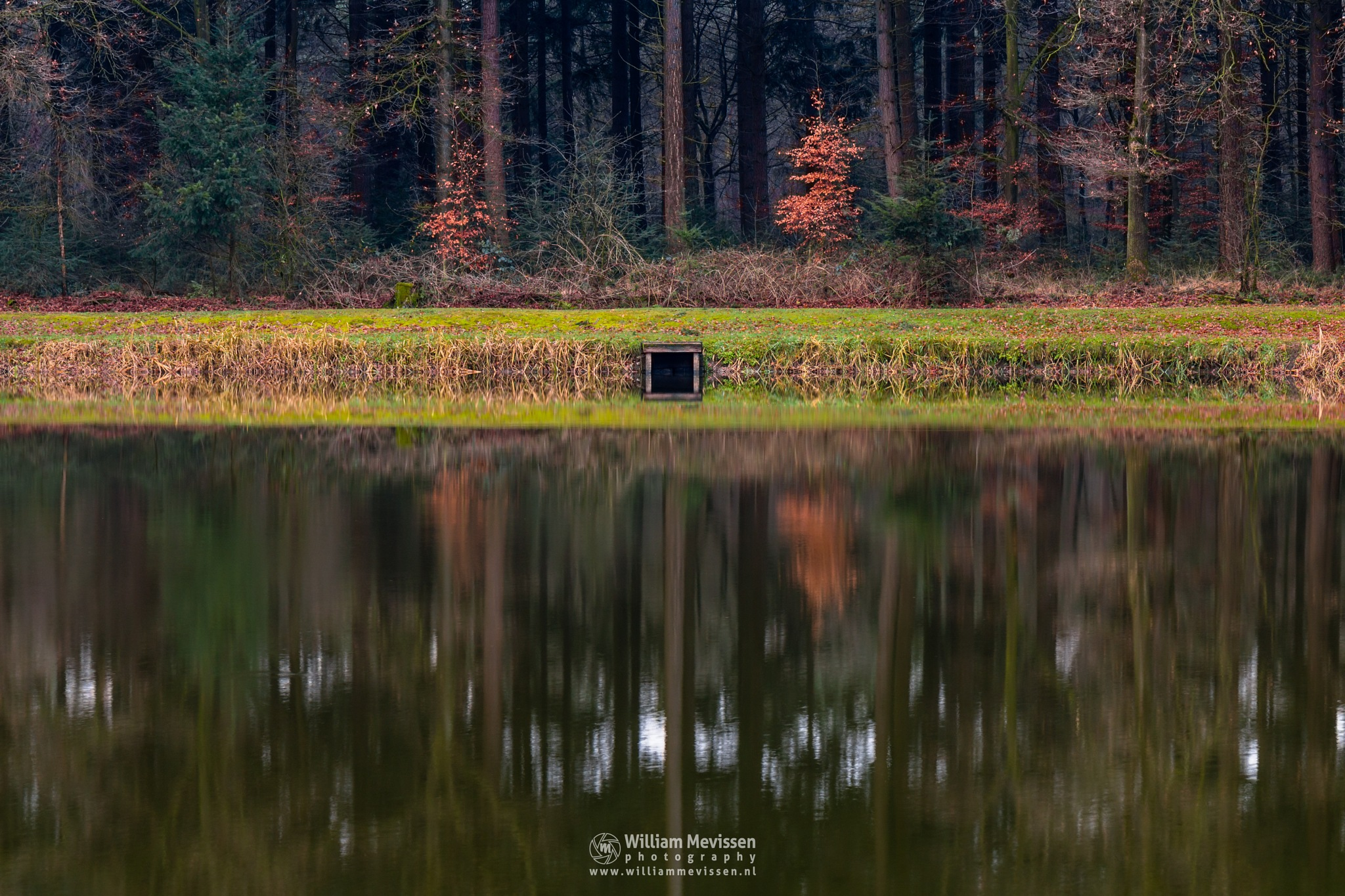 Forest Mirror by William Mevissen