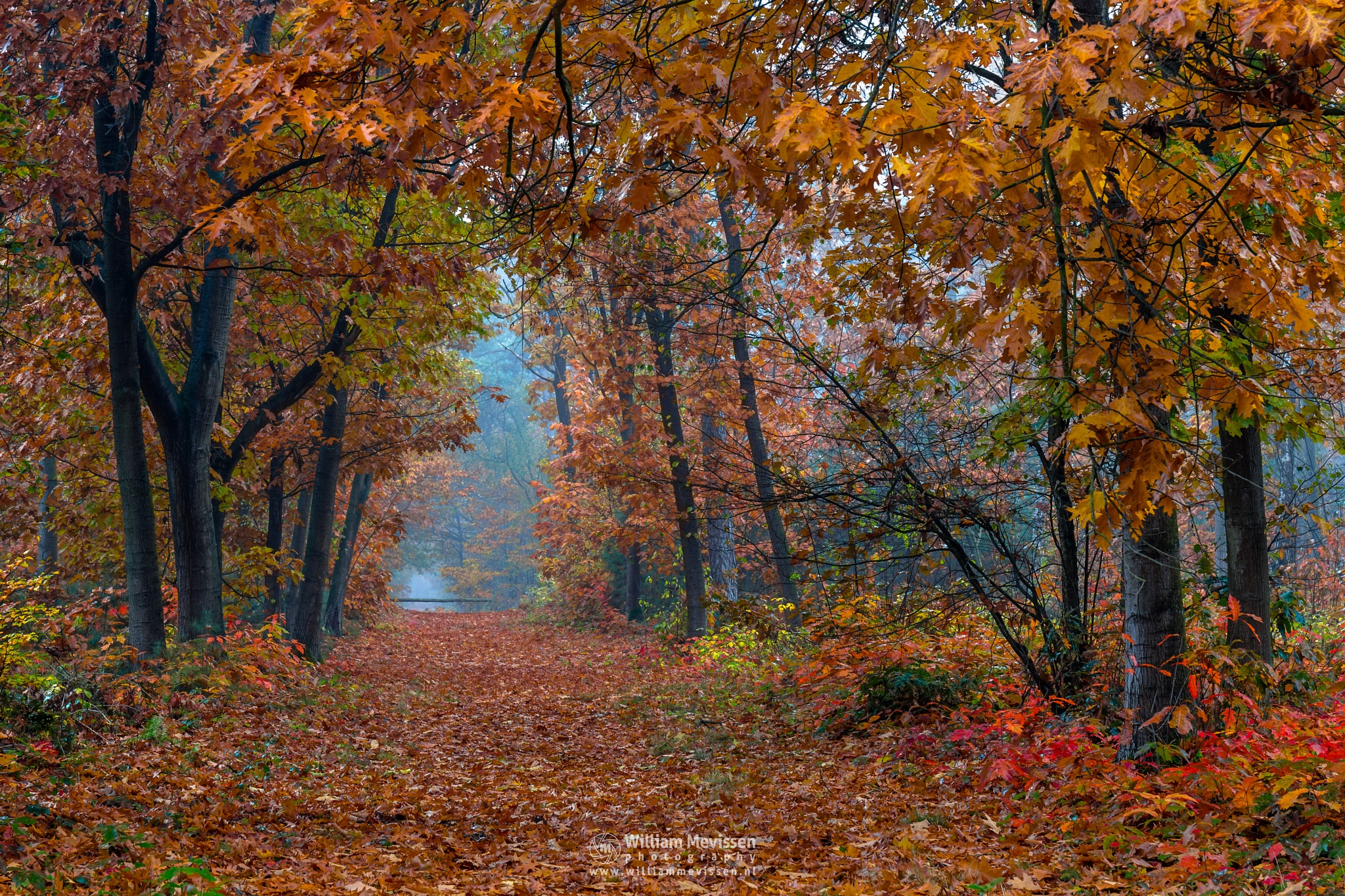 Autumn's Palette  by William Mevissen