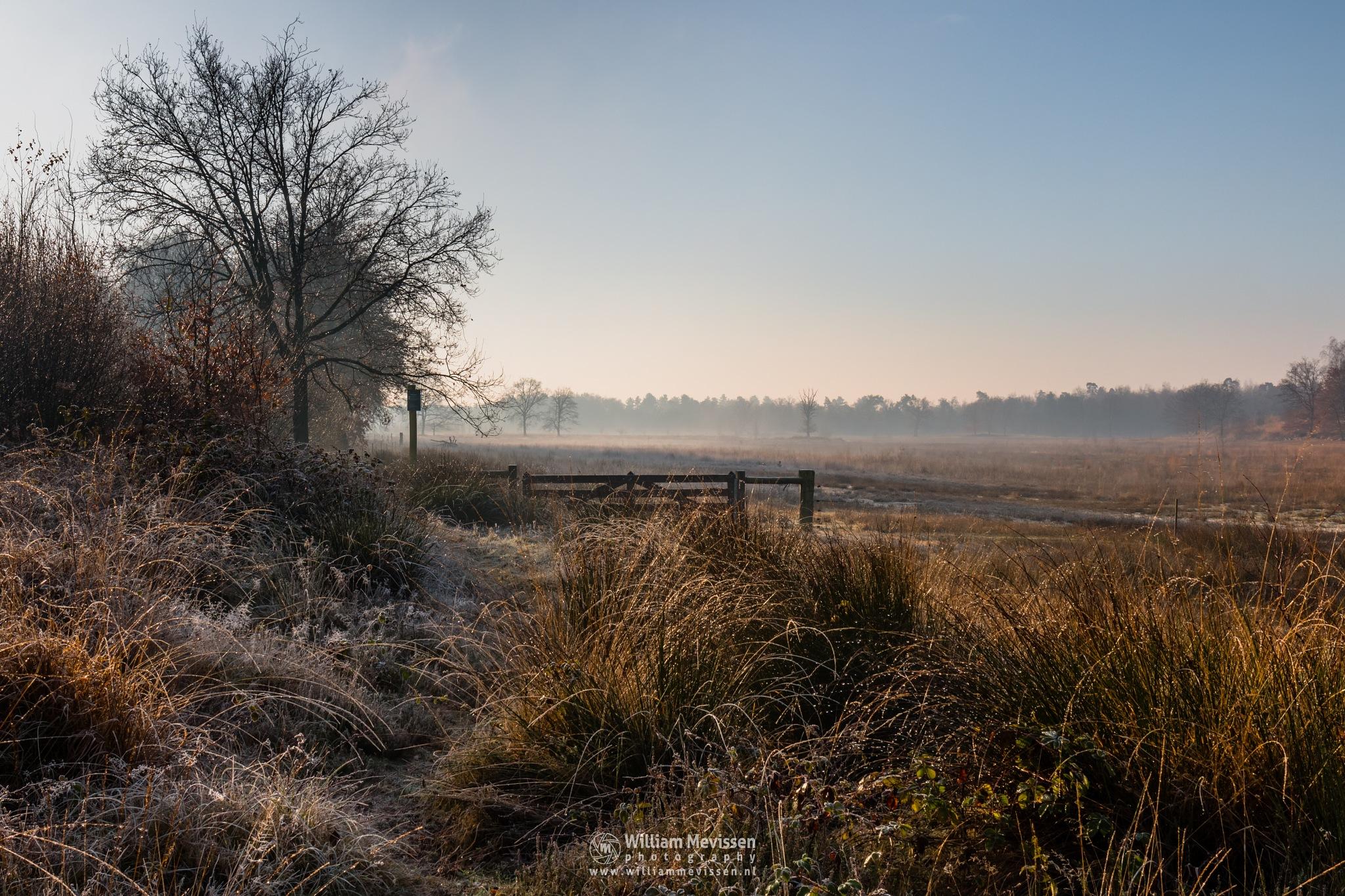Gate Into The Mist by William Mevissen