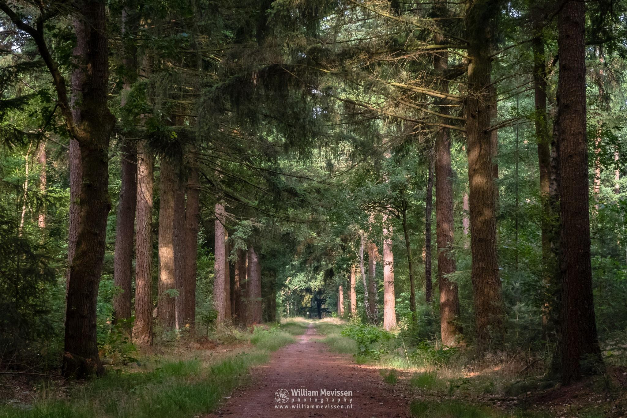 Forest Lane by William Mevissen