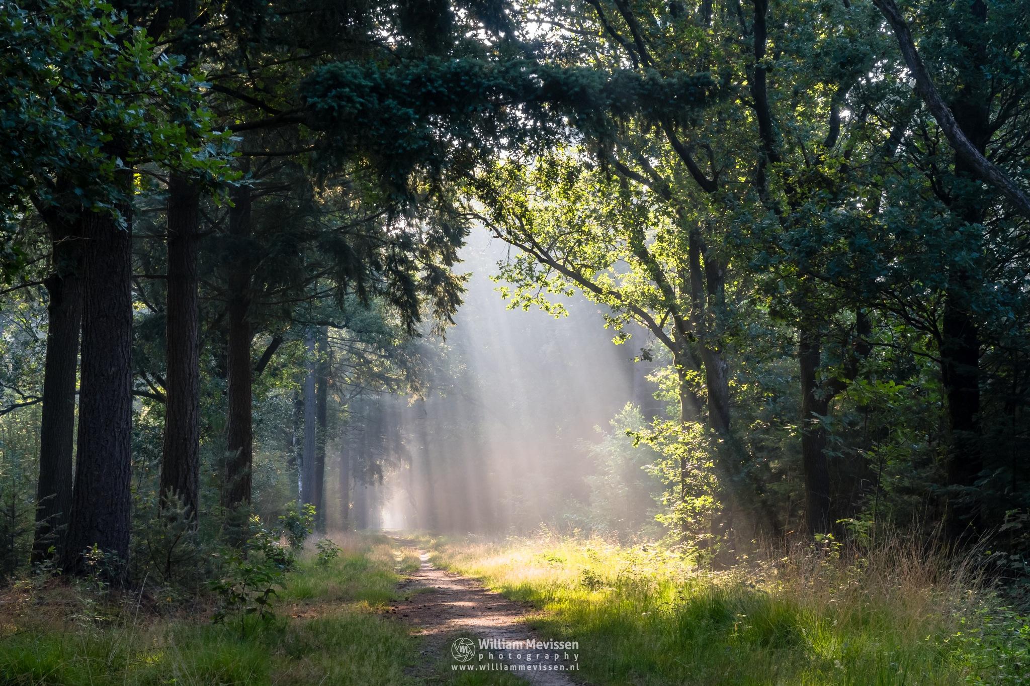 Raining Light by William Mevissen