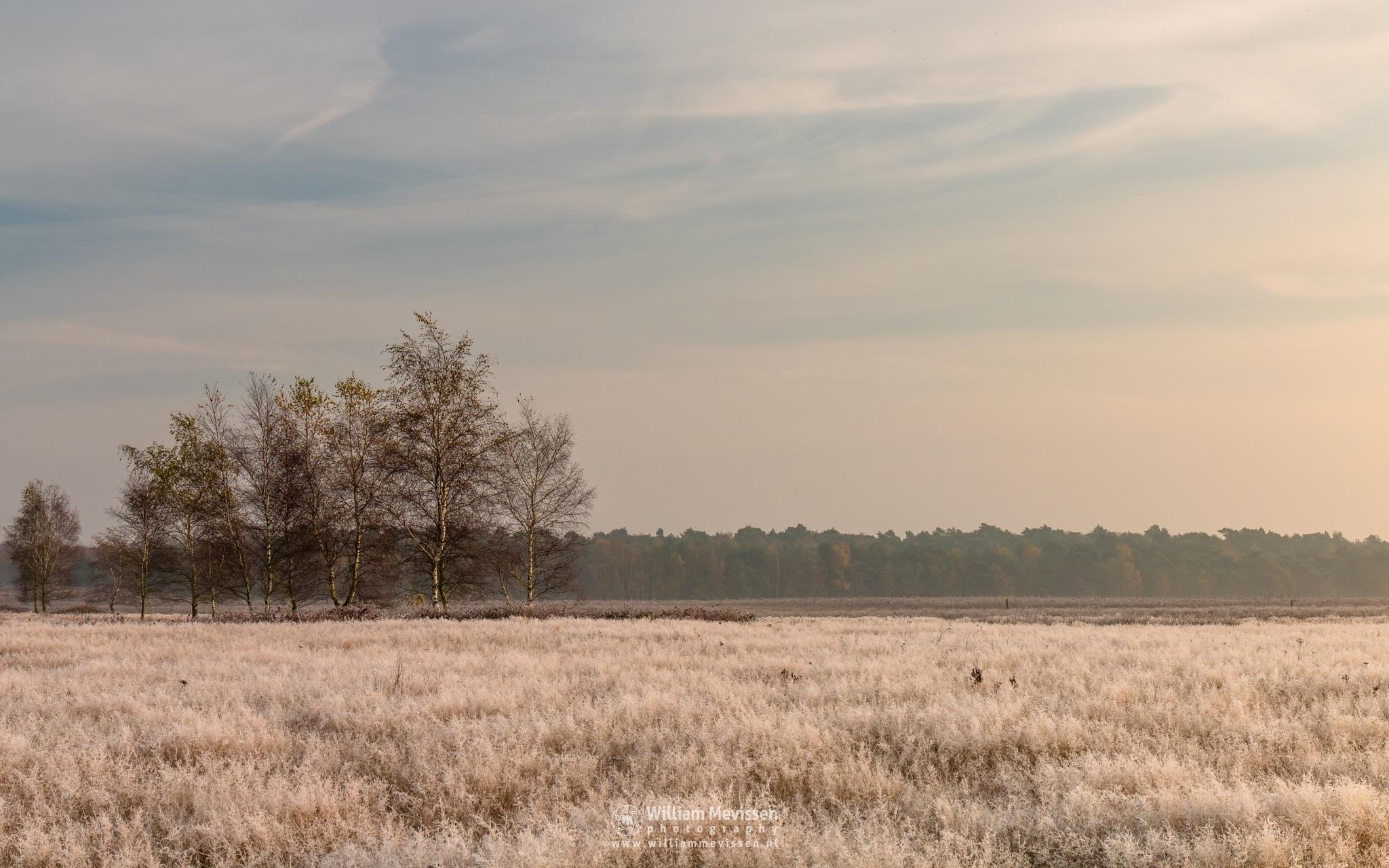 Photo in Random #bergerheide #forest #maasduinen #limburg #noord-limburg #nieuw-bergen #bergen #nature #light #autumn #mist #mood #surise