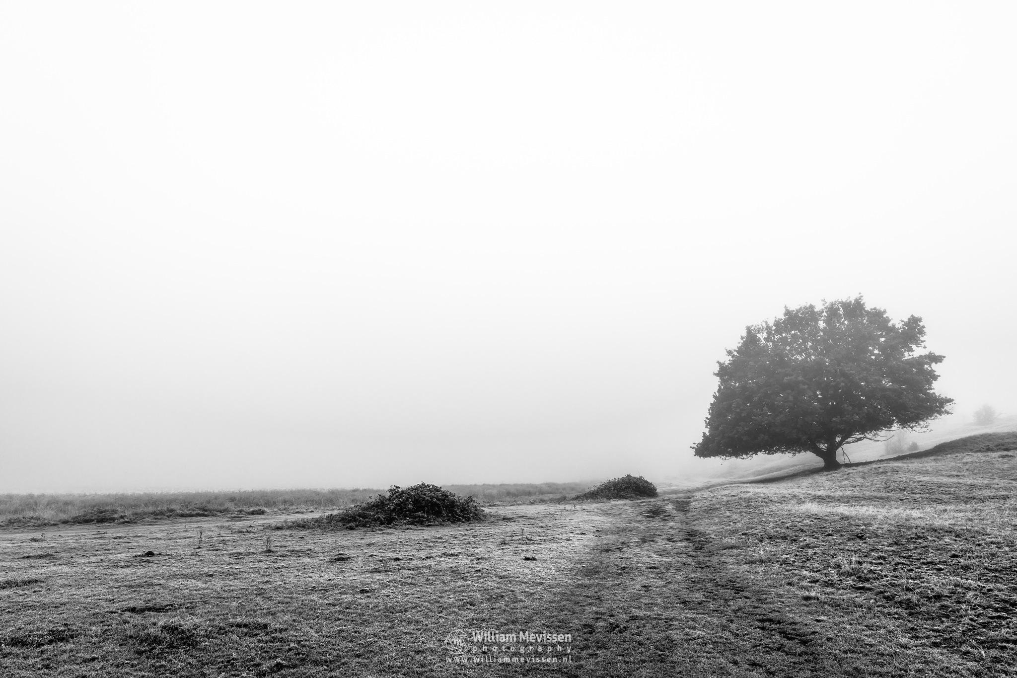 Driessenven In The Mist by William Mevissen