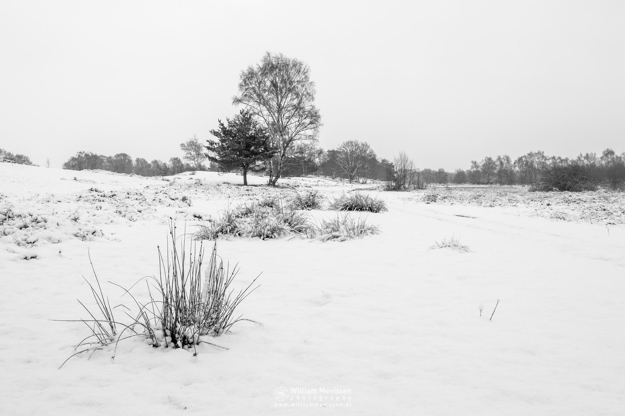 Winter Landscape by William Mevissen