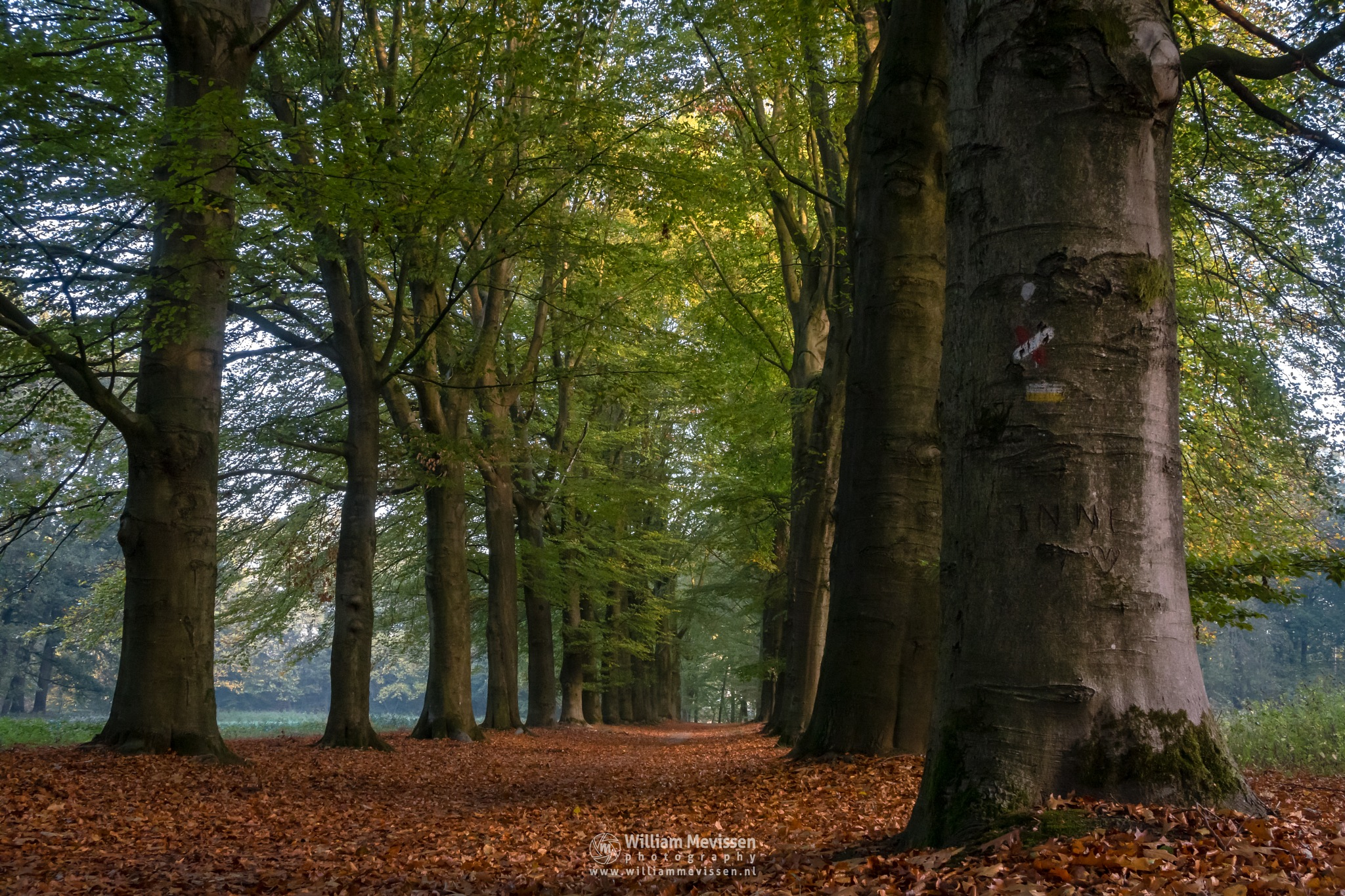 Autumn Mood Geijsteren by William Mevissen