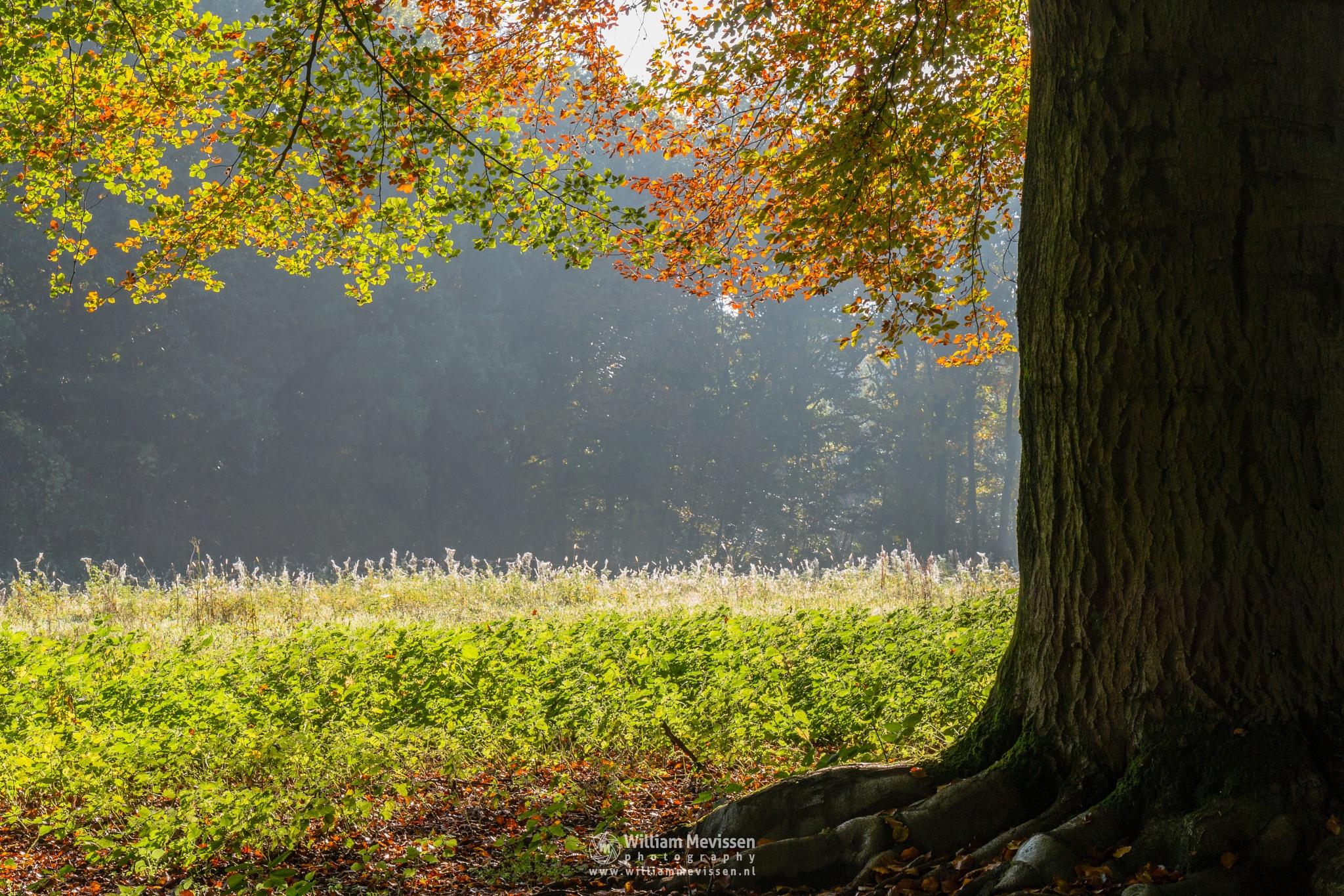 Autumn's Big Foot by William Mevissen