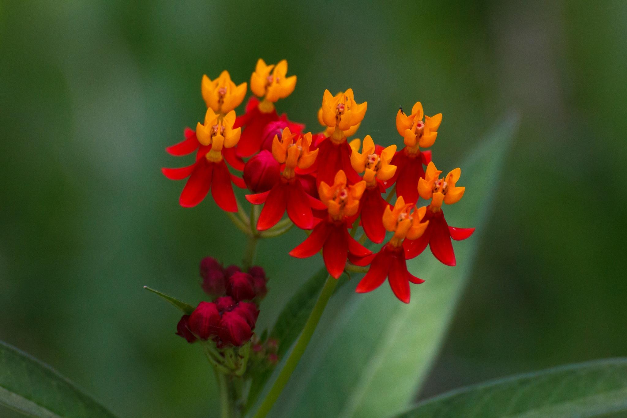 Red in Nature  by vishwaswatwe