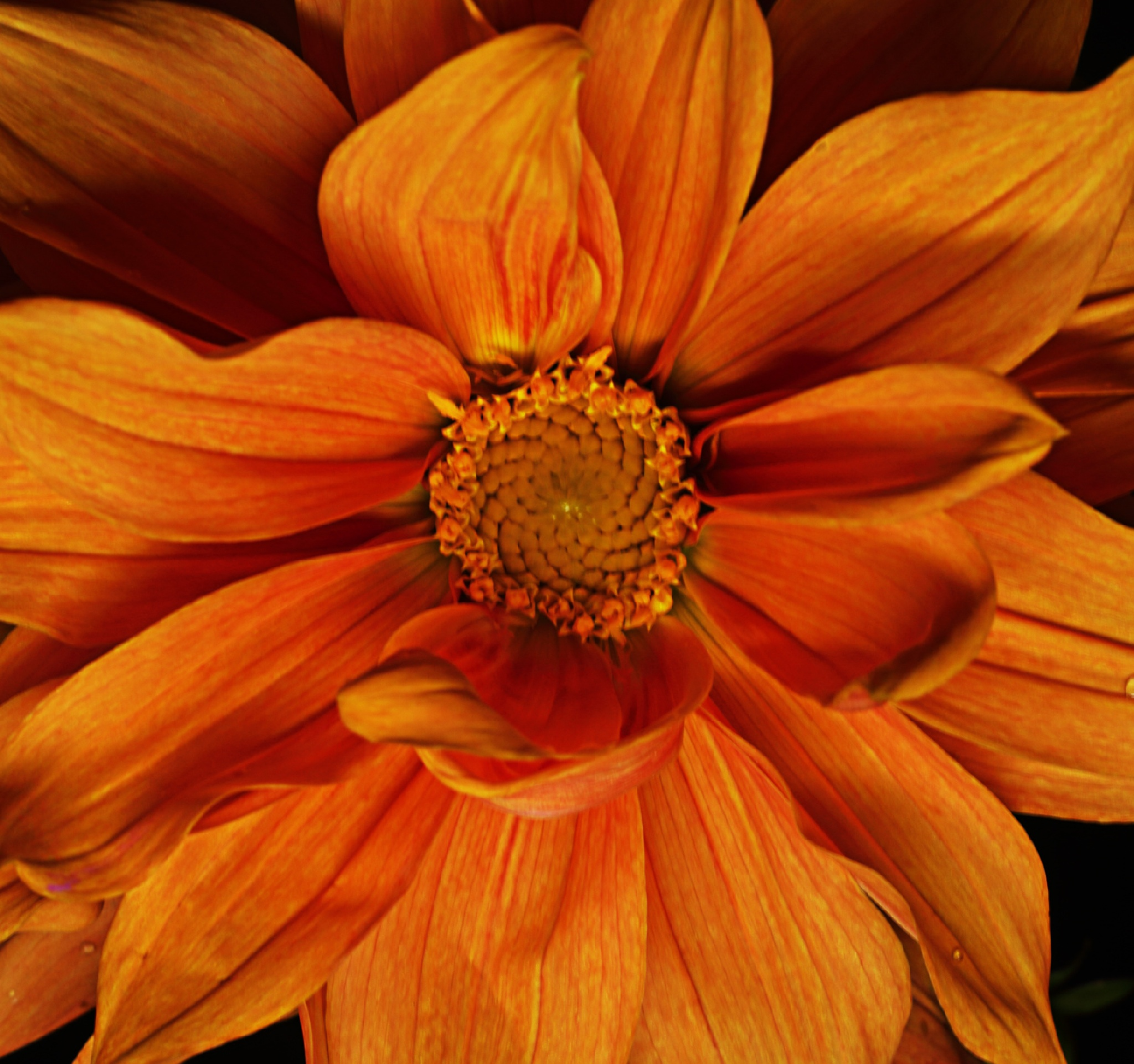 orange by Jason Lavine