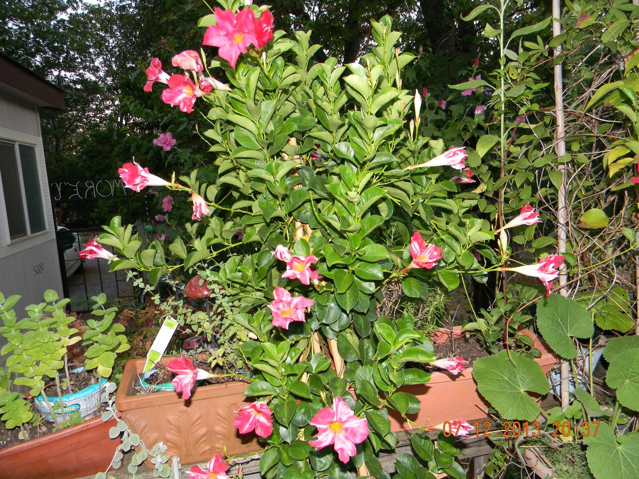 Beautiful flower shrub by joy.kilpatric
