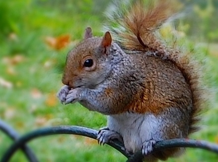 Park squirrel by Barb Light