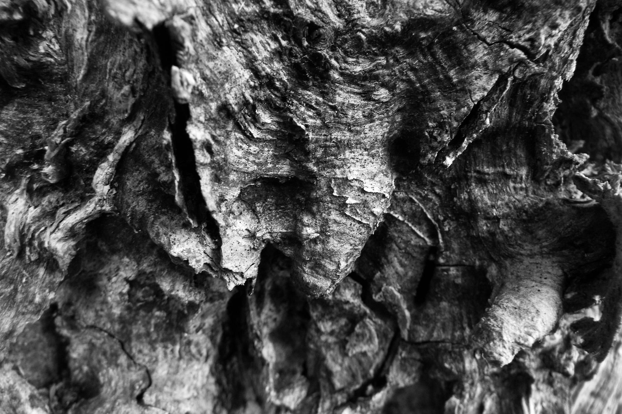 Old Log by Kathleen Christopher