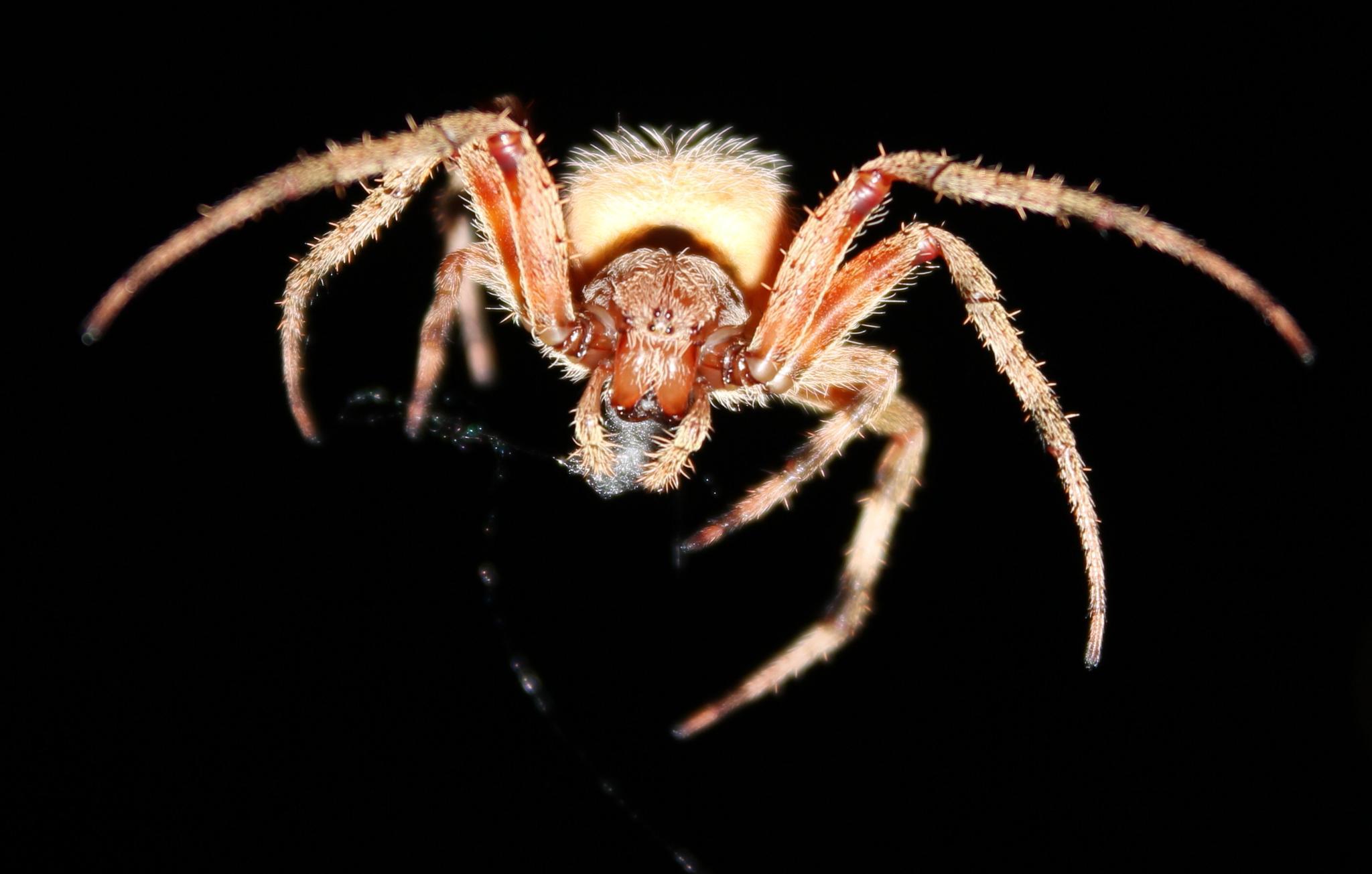 Spider in Flight by auntphibian