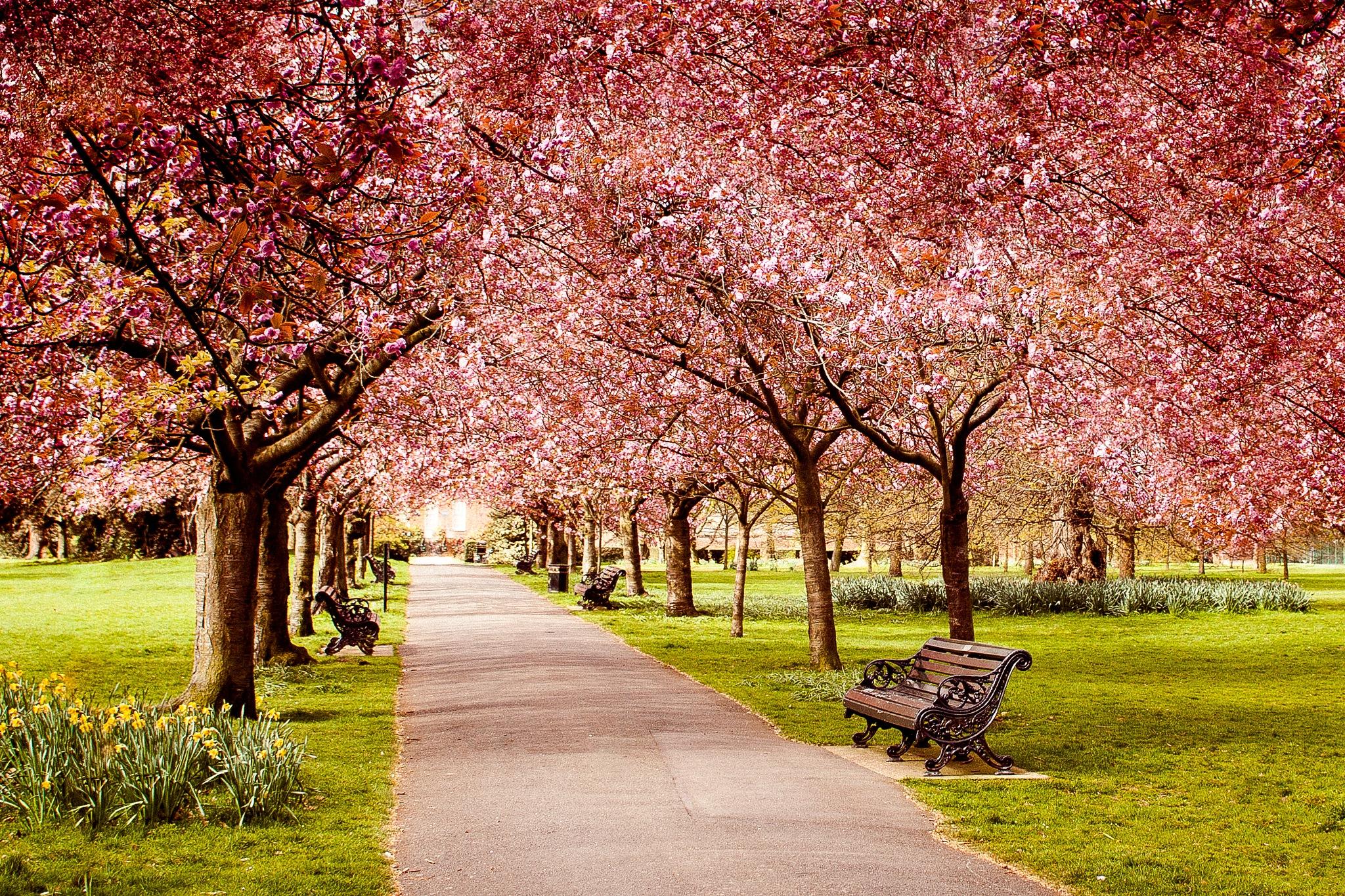 Spring in Greenwich by edita.toma