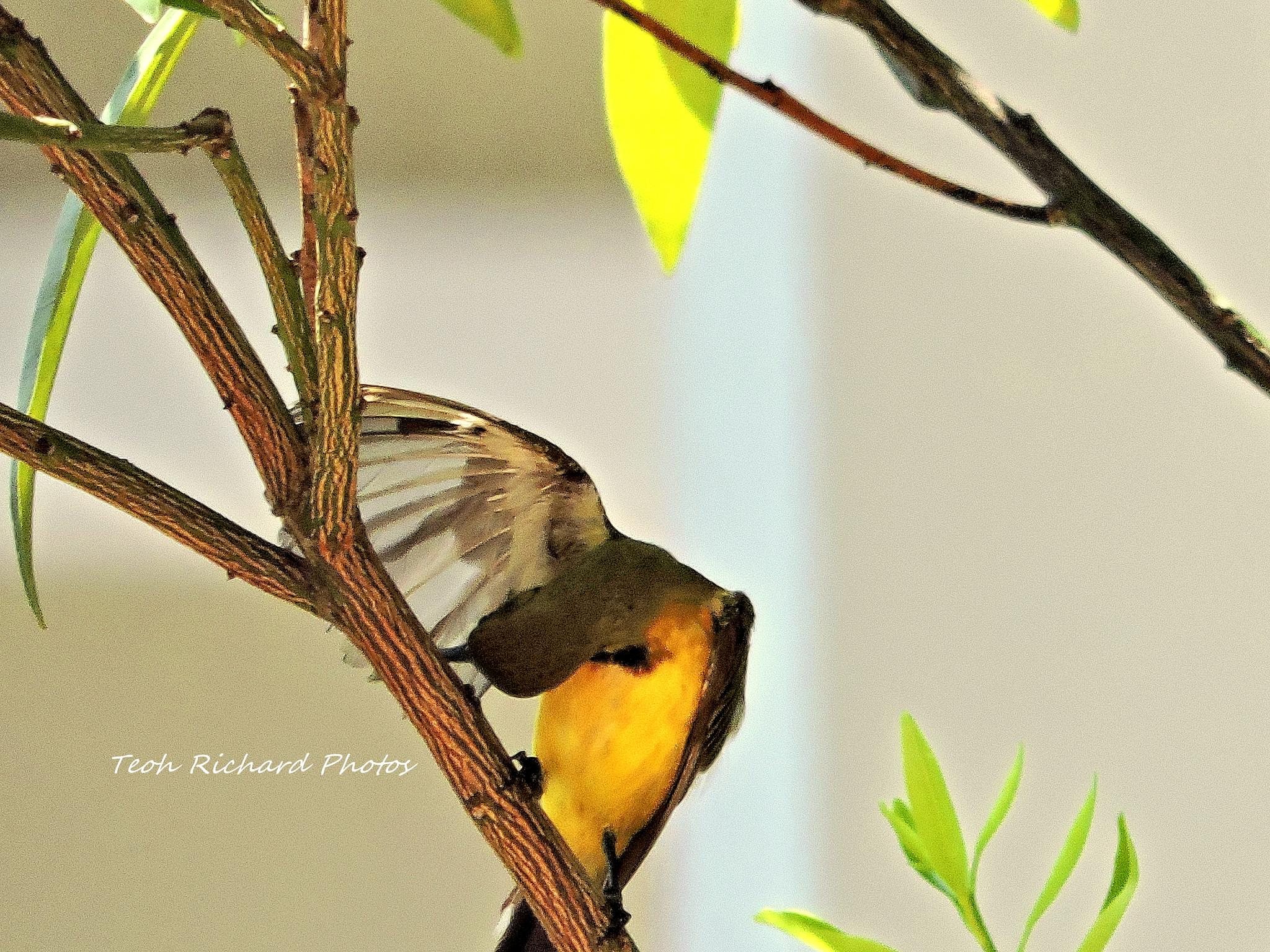 The Sunbird 2 by teoh.richard.15