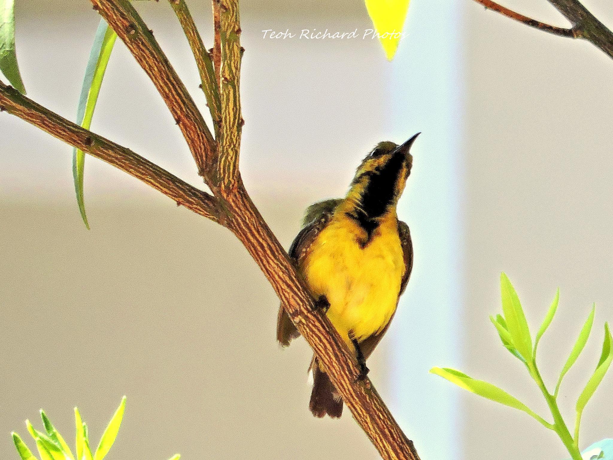 The Sunbird 3 by teoh.richard.15