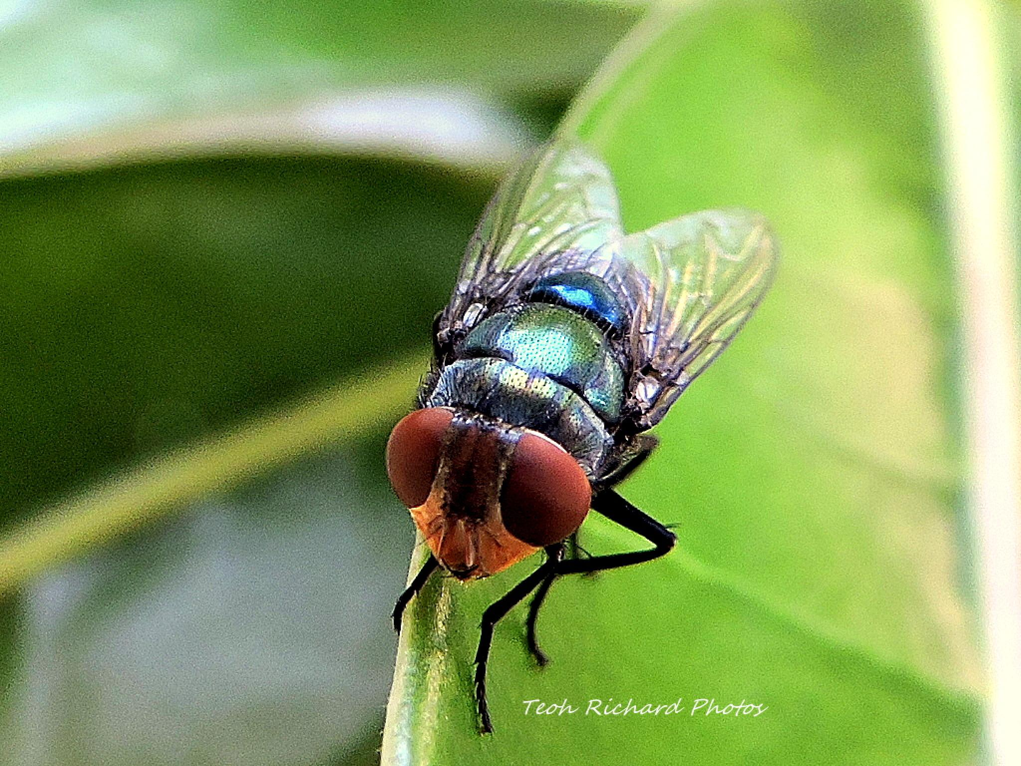 Photo in Macro #front view #fly #macro