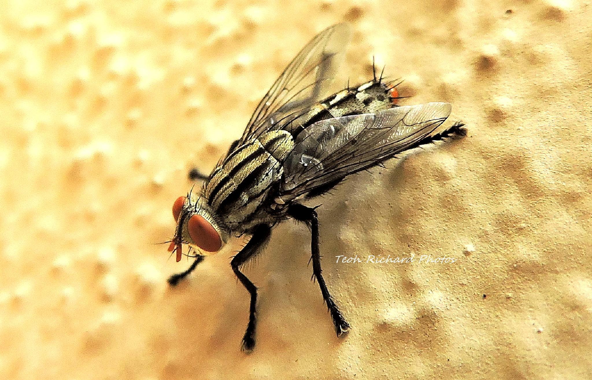 Photo in Macro #sharper #fly #macro