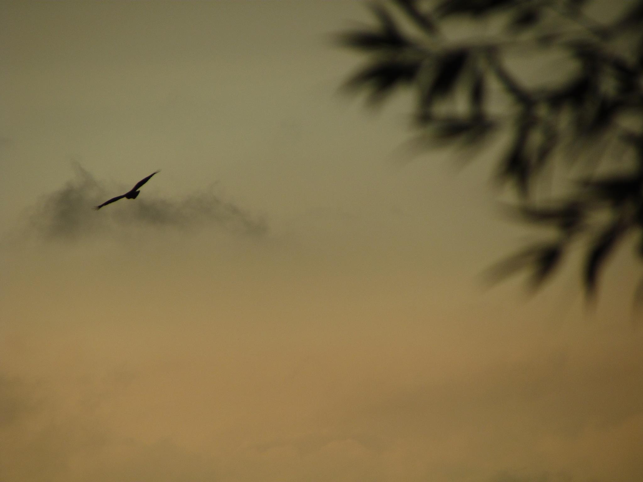 EAGLE by marta.figurzynskaderouiche
