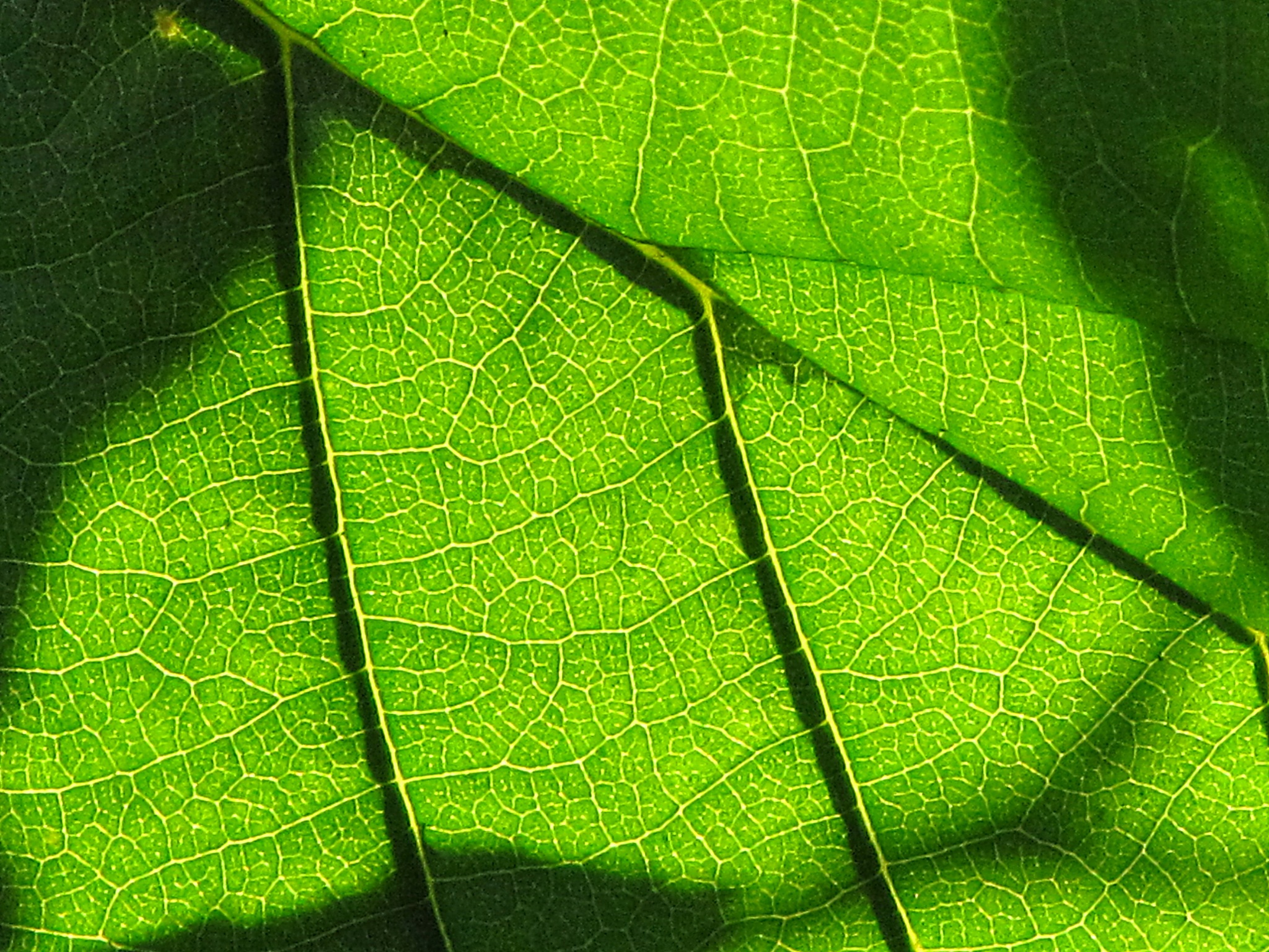 GREEN 2 by marta.figurzynskaderouiche