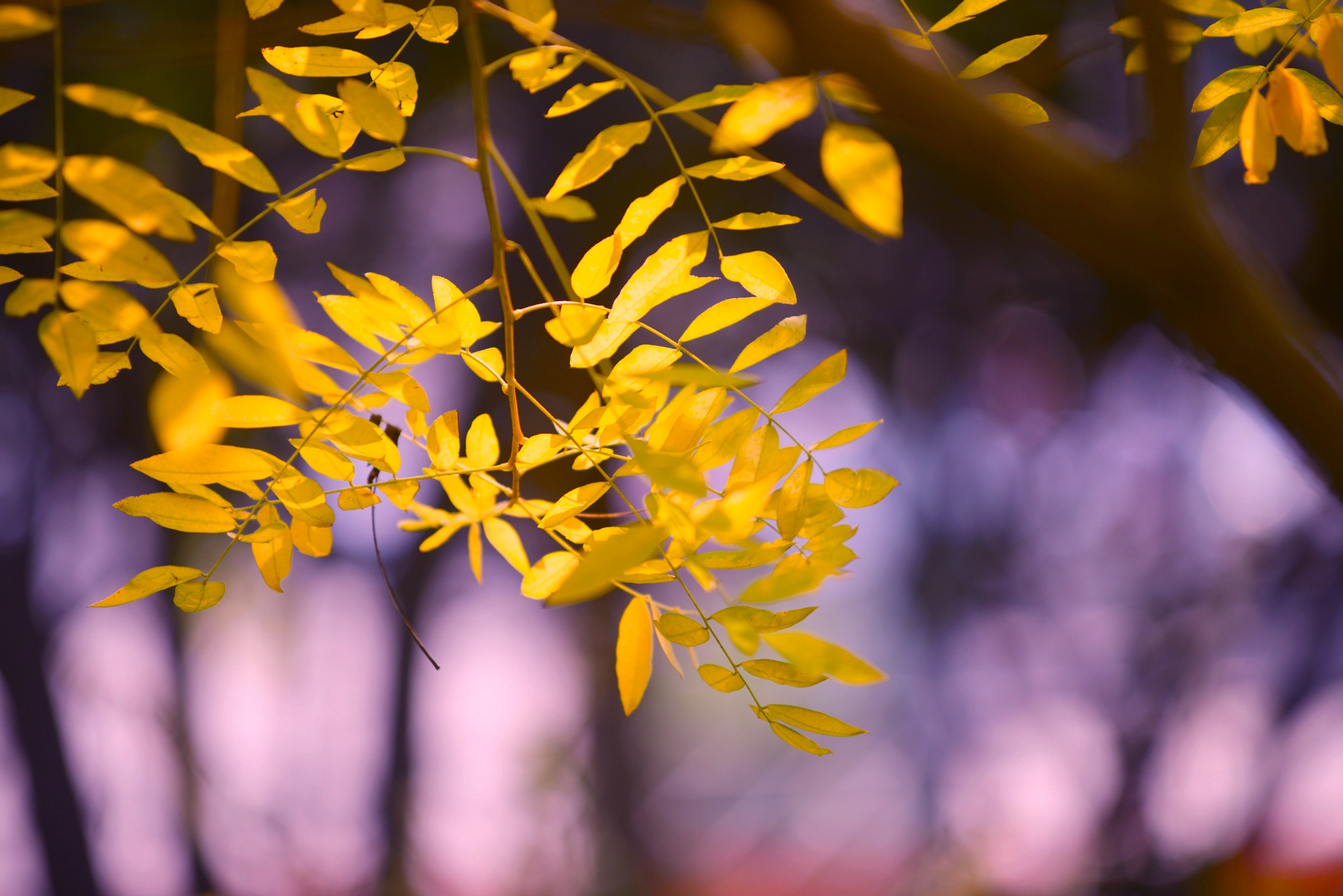 Yellow Leaves by Francisco Little