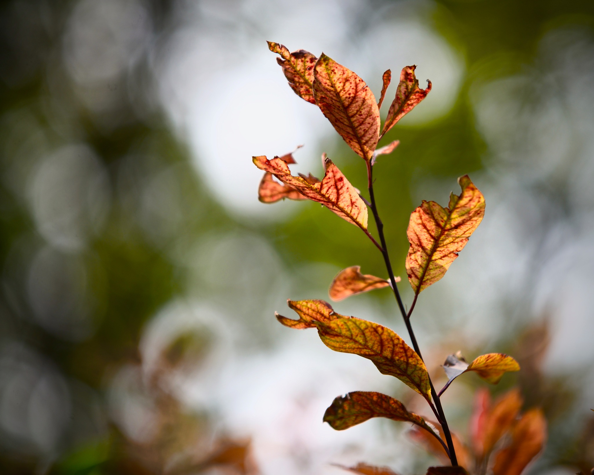 Rusty Leaves by Francisco Little
