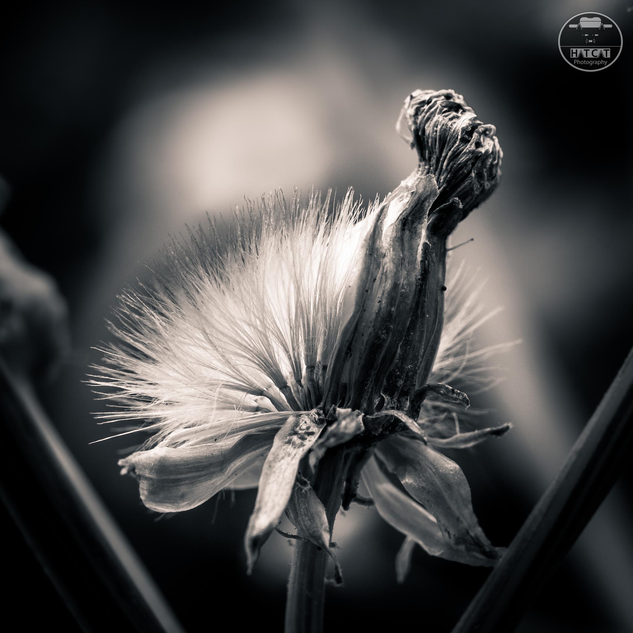 Photo in Black and White #xt1 #fuji #zeiss #touit50 #macro