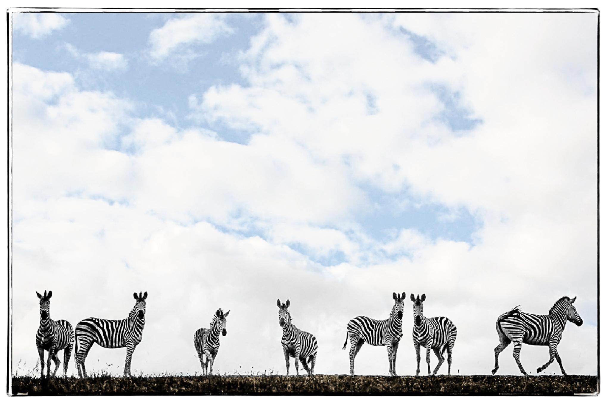 Zebra gathering by Joggie van Staden