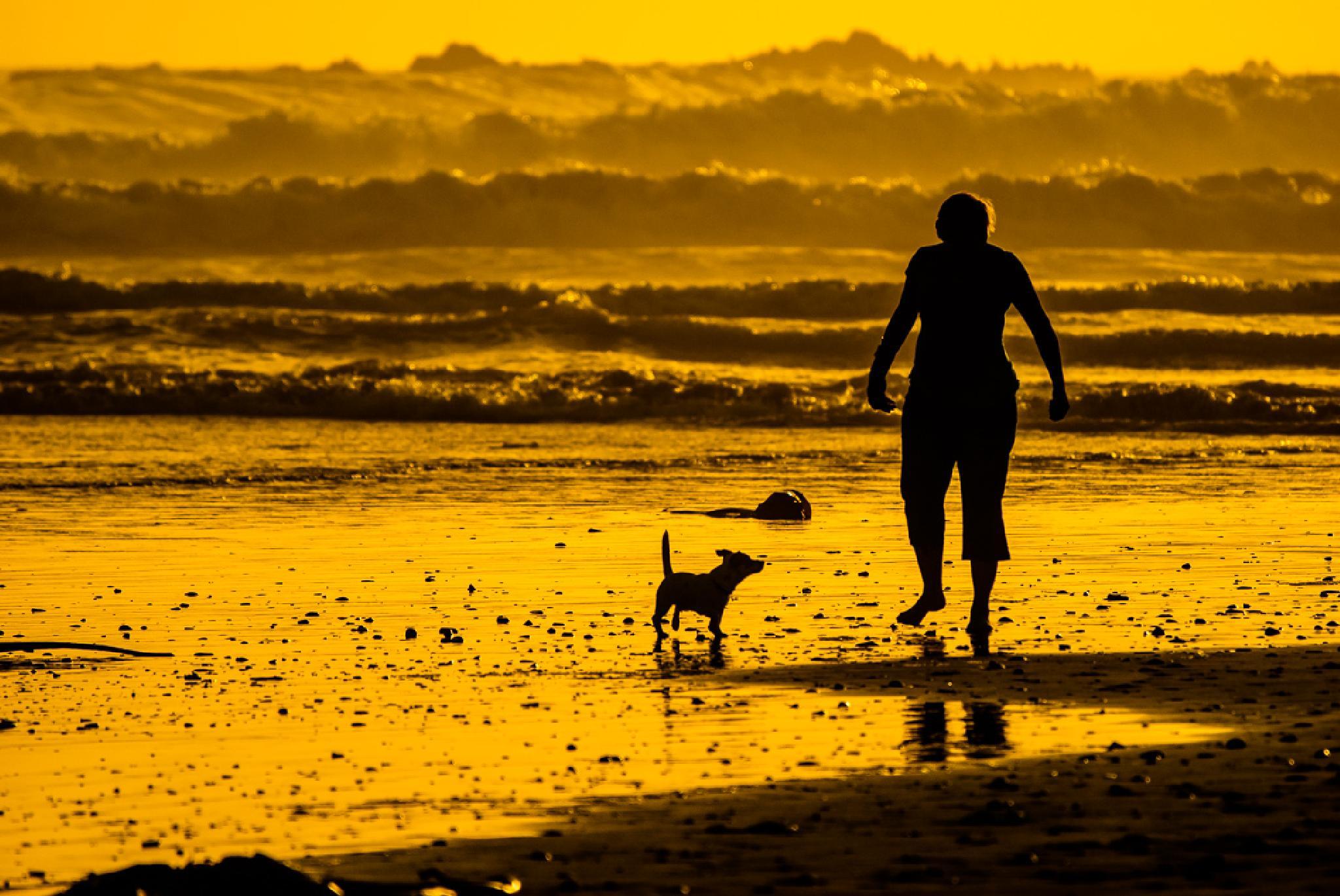 Golden hour by Joggie van Staden