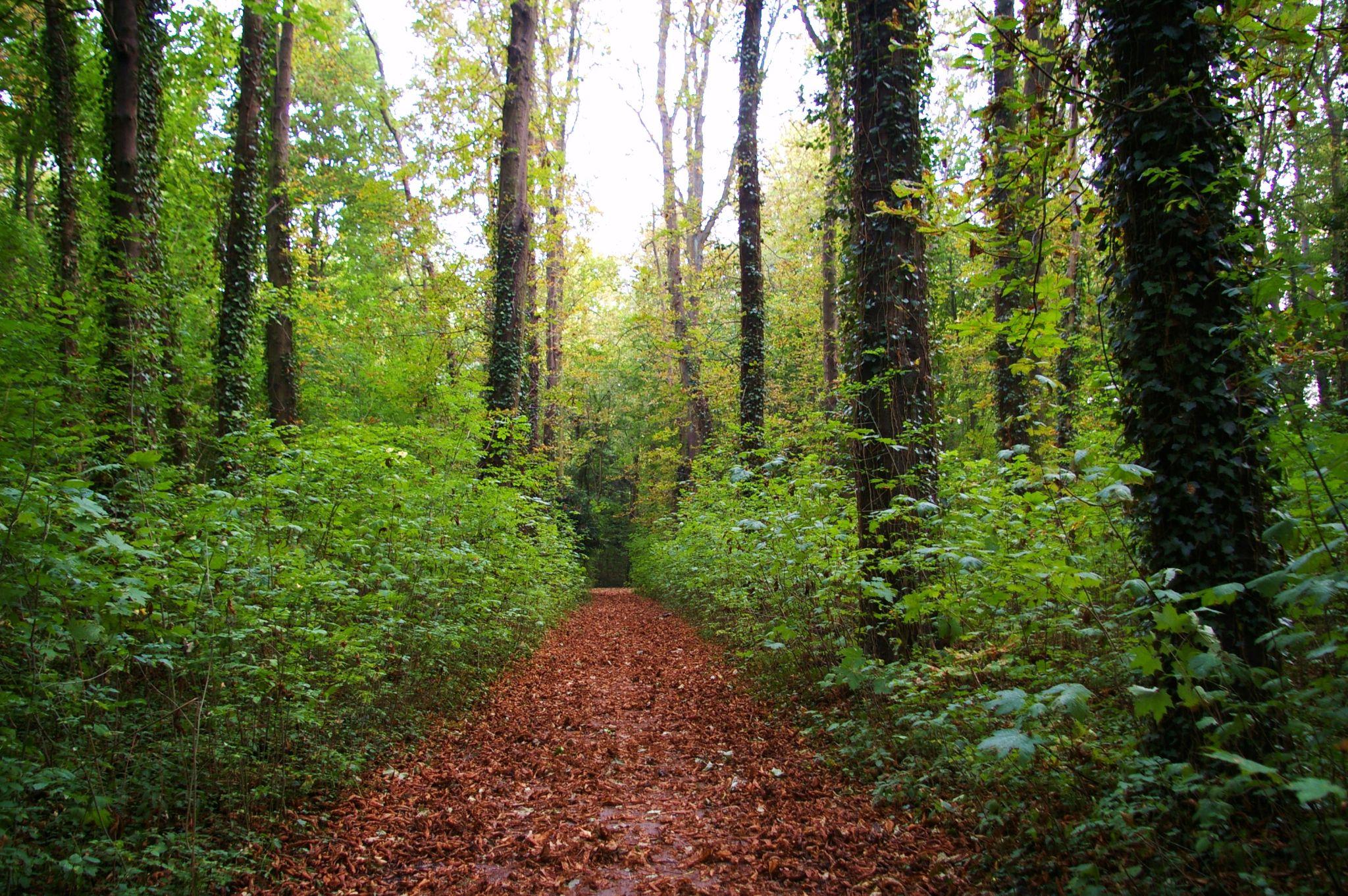 Forêt de marroniers by Bulle2a