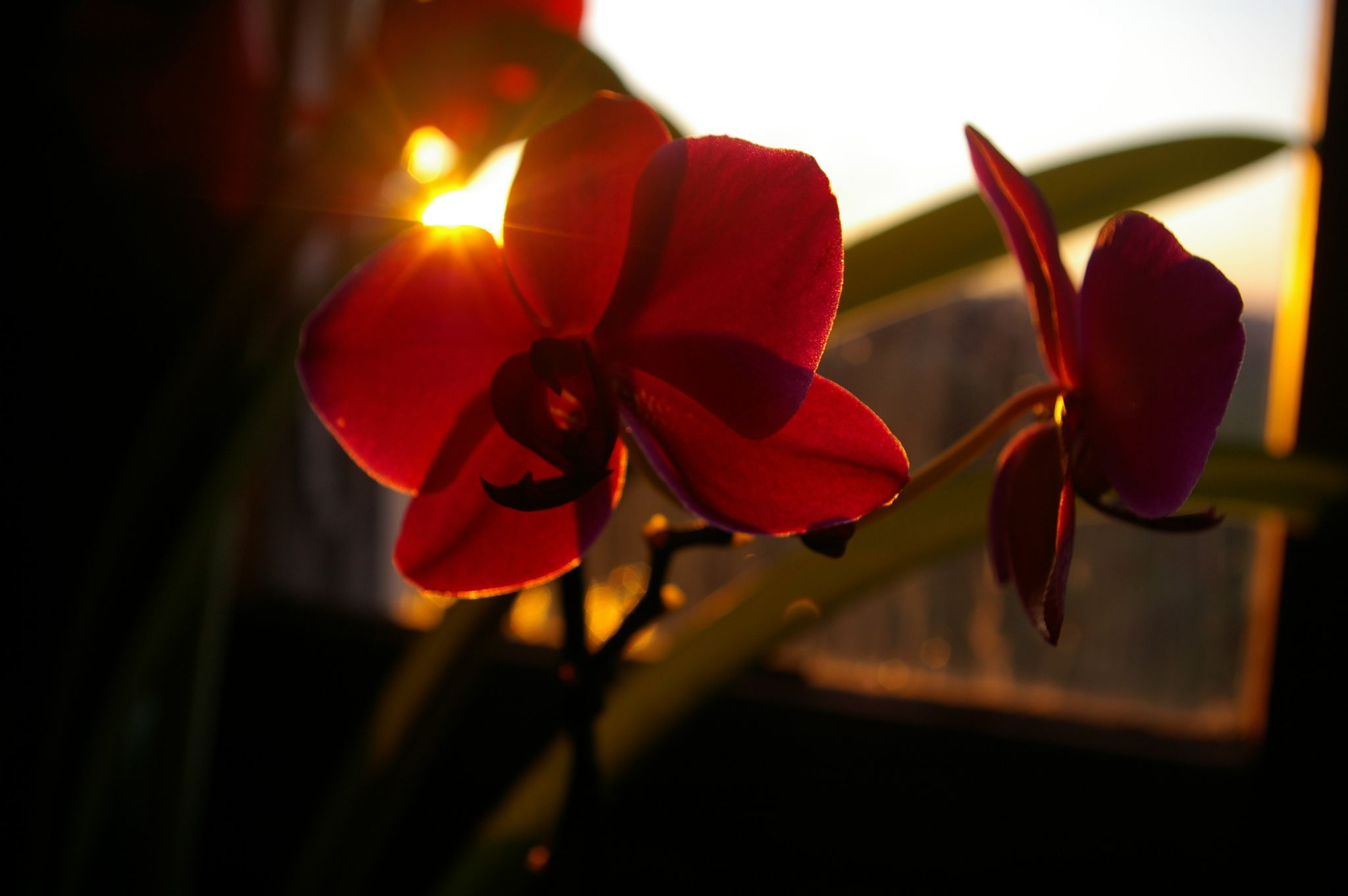 Orchidee by Bulle2a
