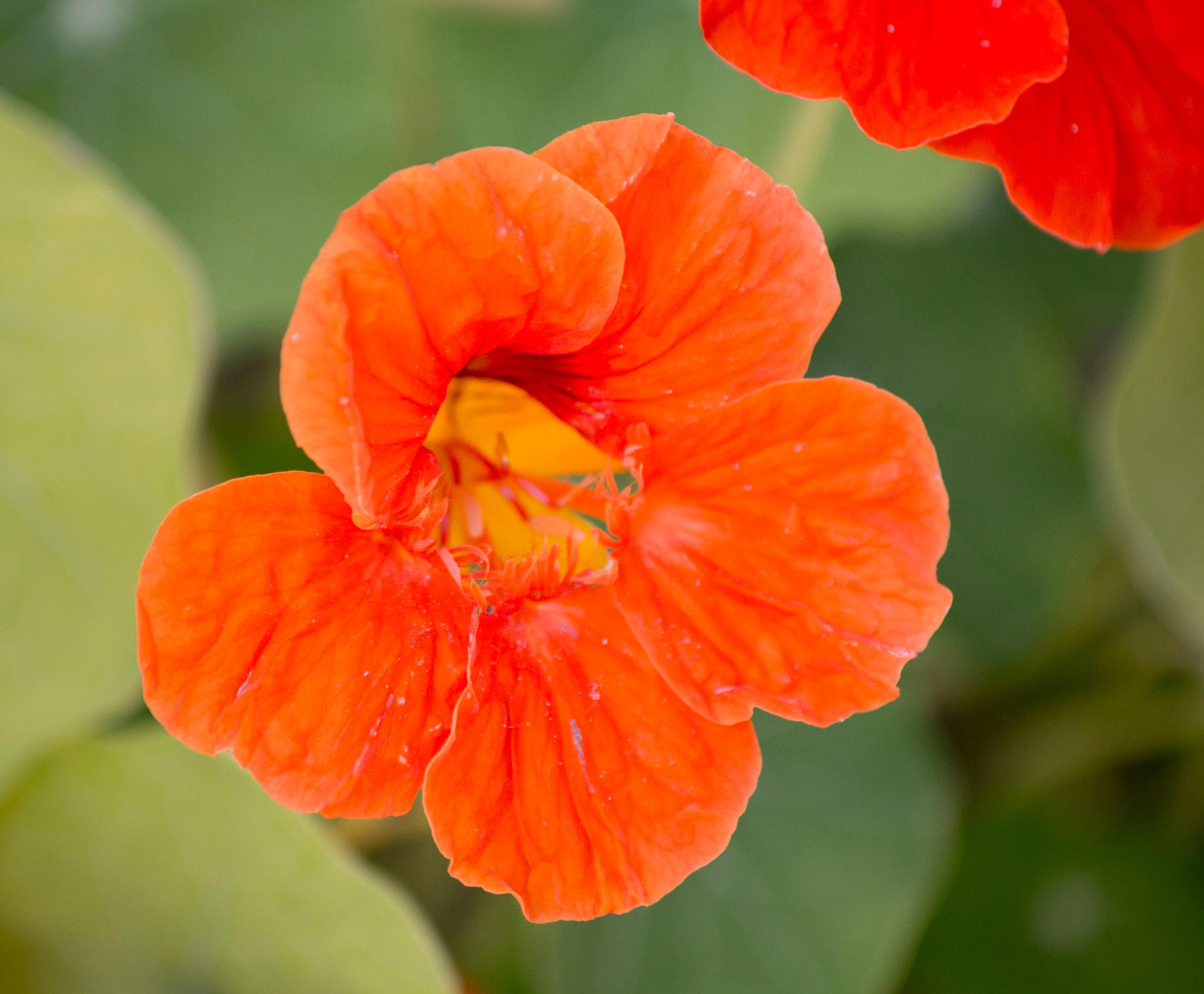 Orange by Kevhyde