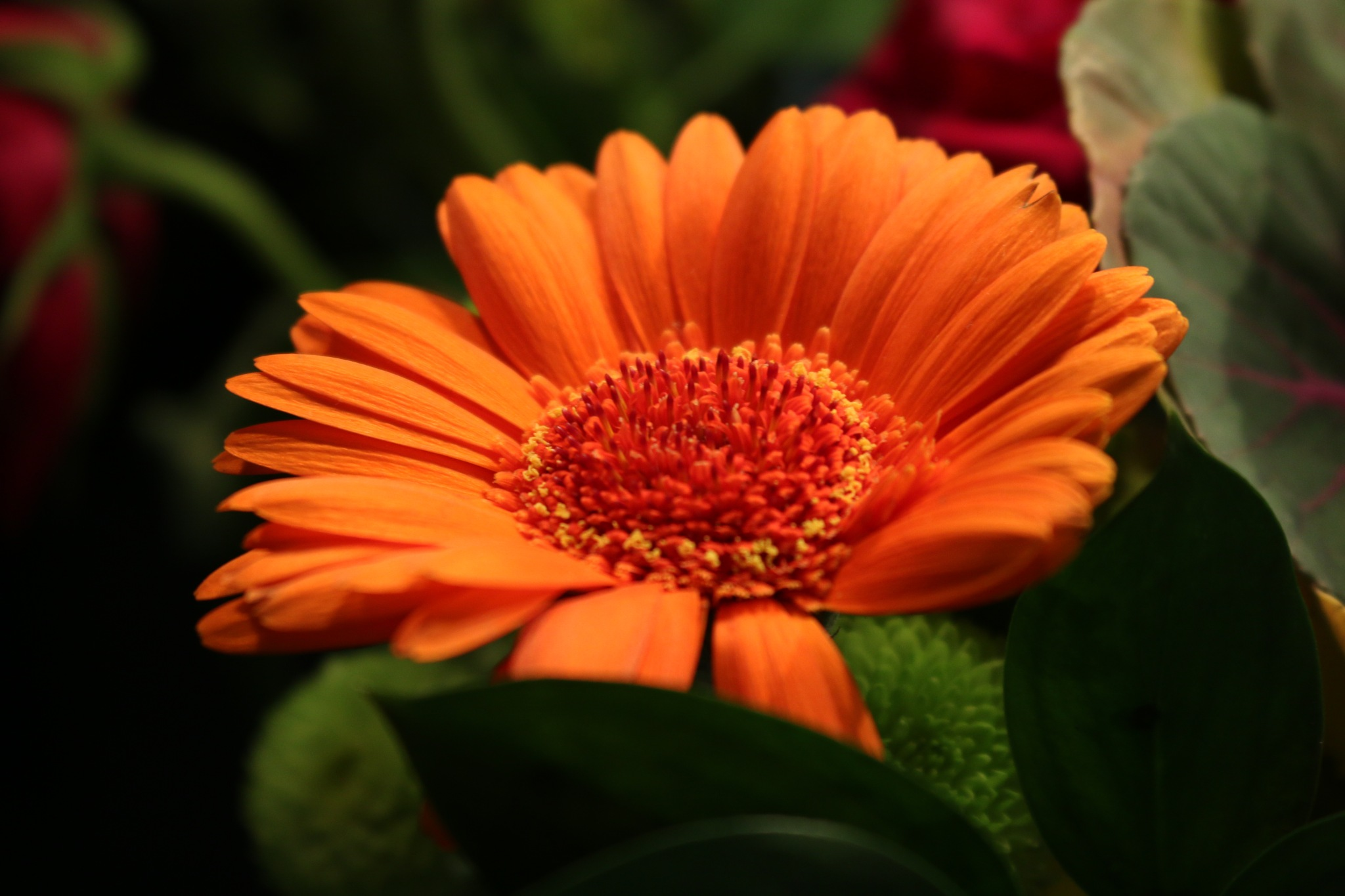 Orange flower by Kevhyde