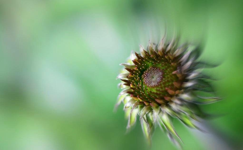 I love old flowers by Mirjam Slotman-Martin