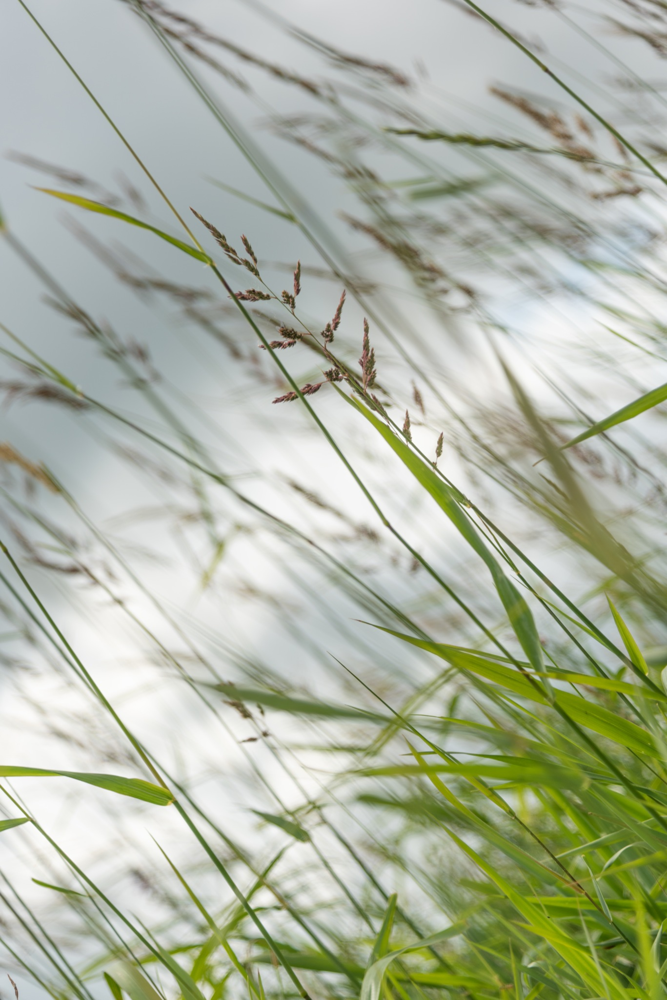 grass by Mirjam Slotman-Martin