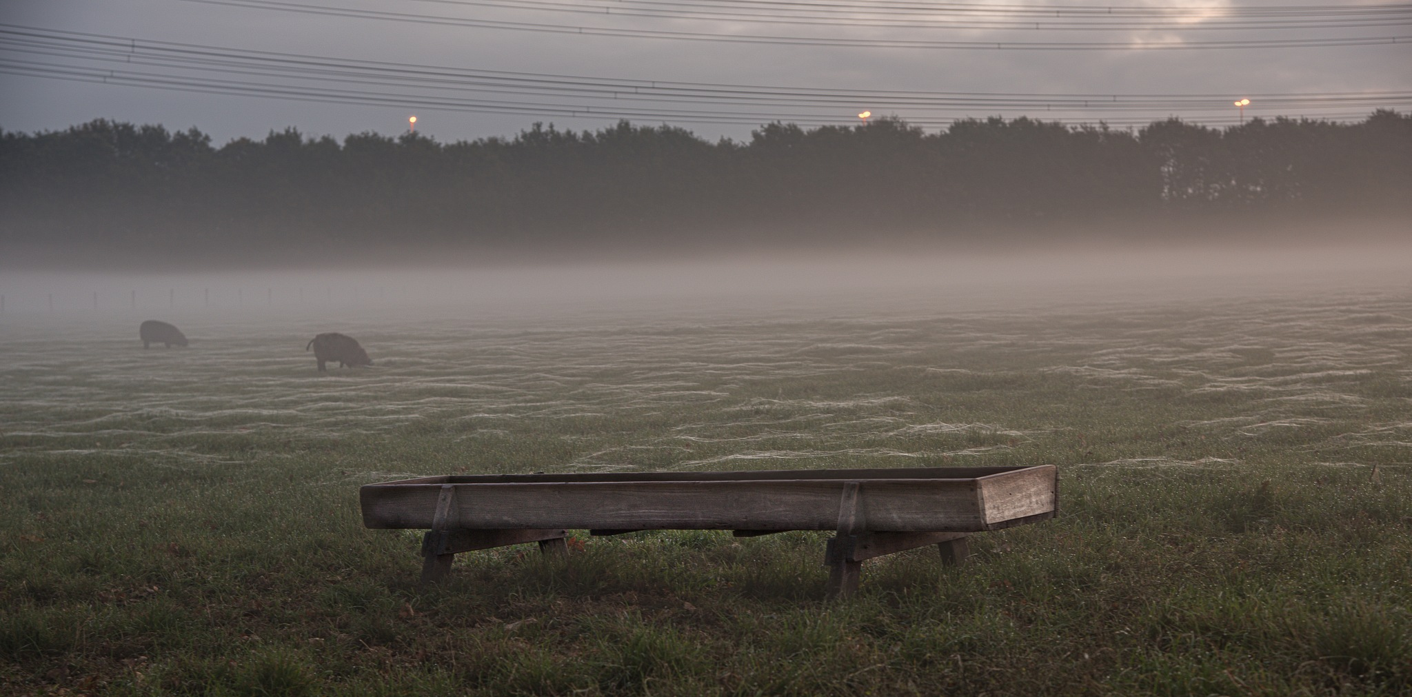 early this morning by Mirjam Slotman-Martin