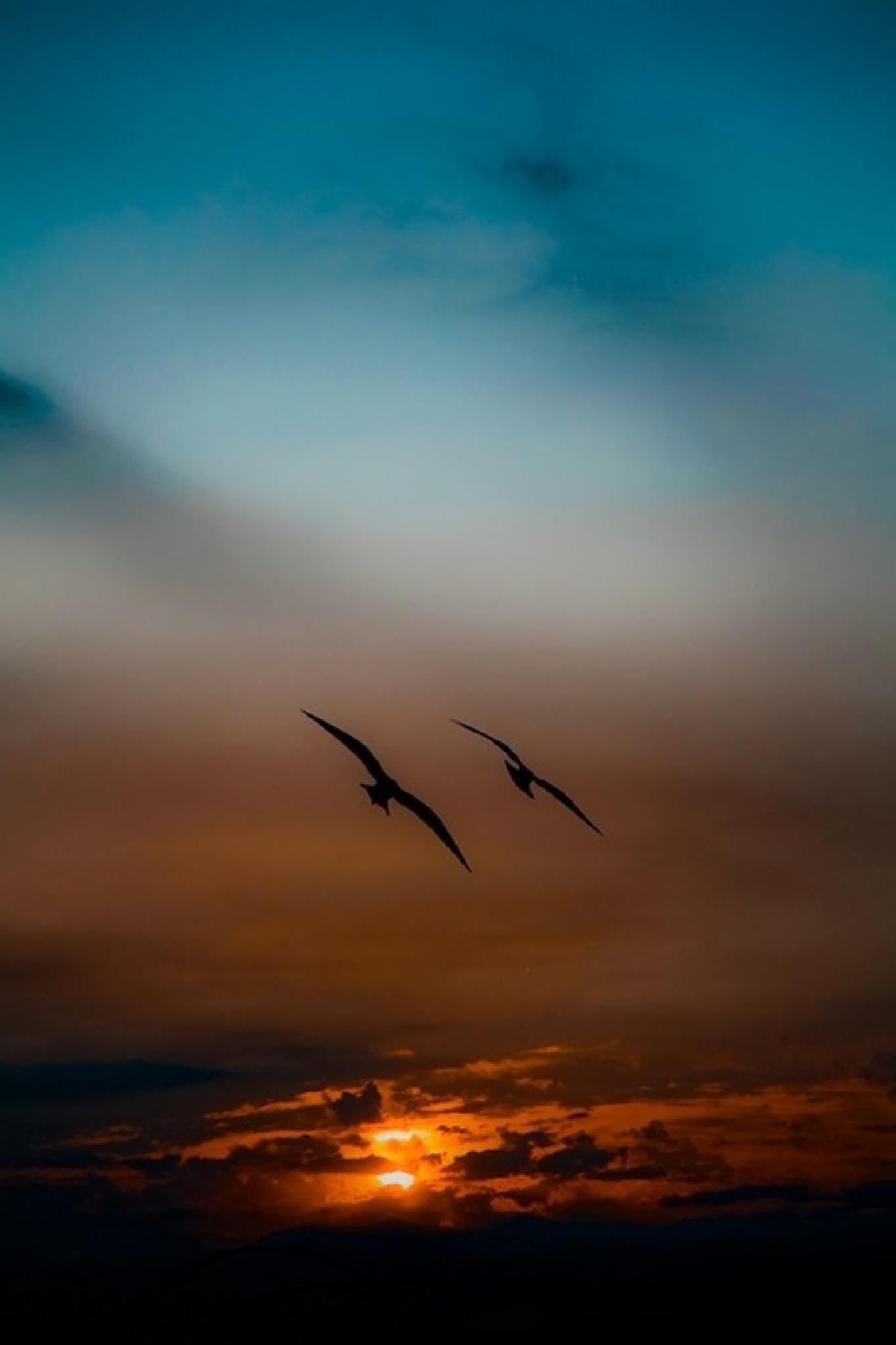 Night Flight by SteveR