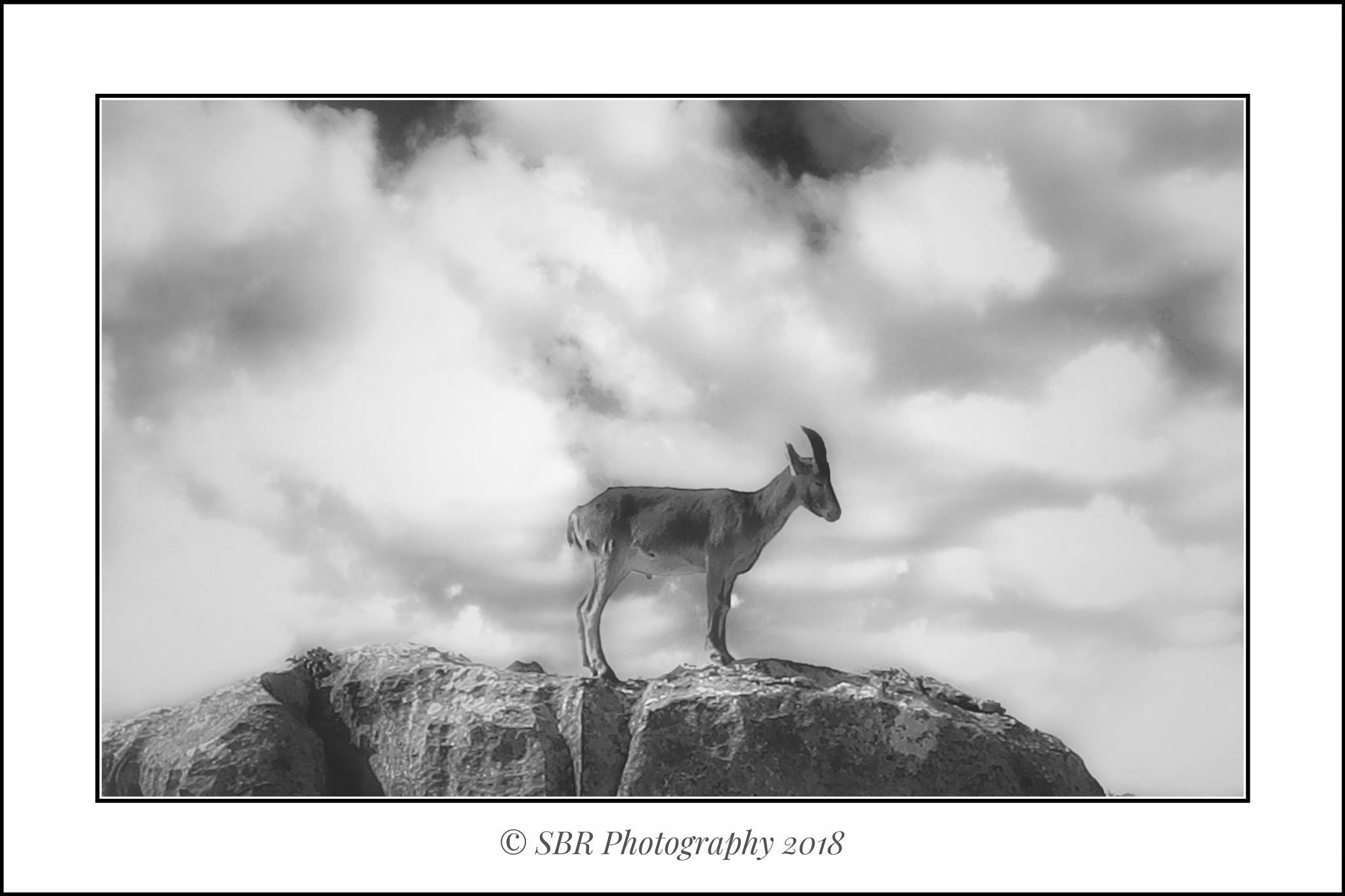 Iberian Goat by SteveR