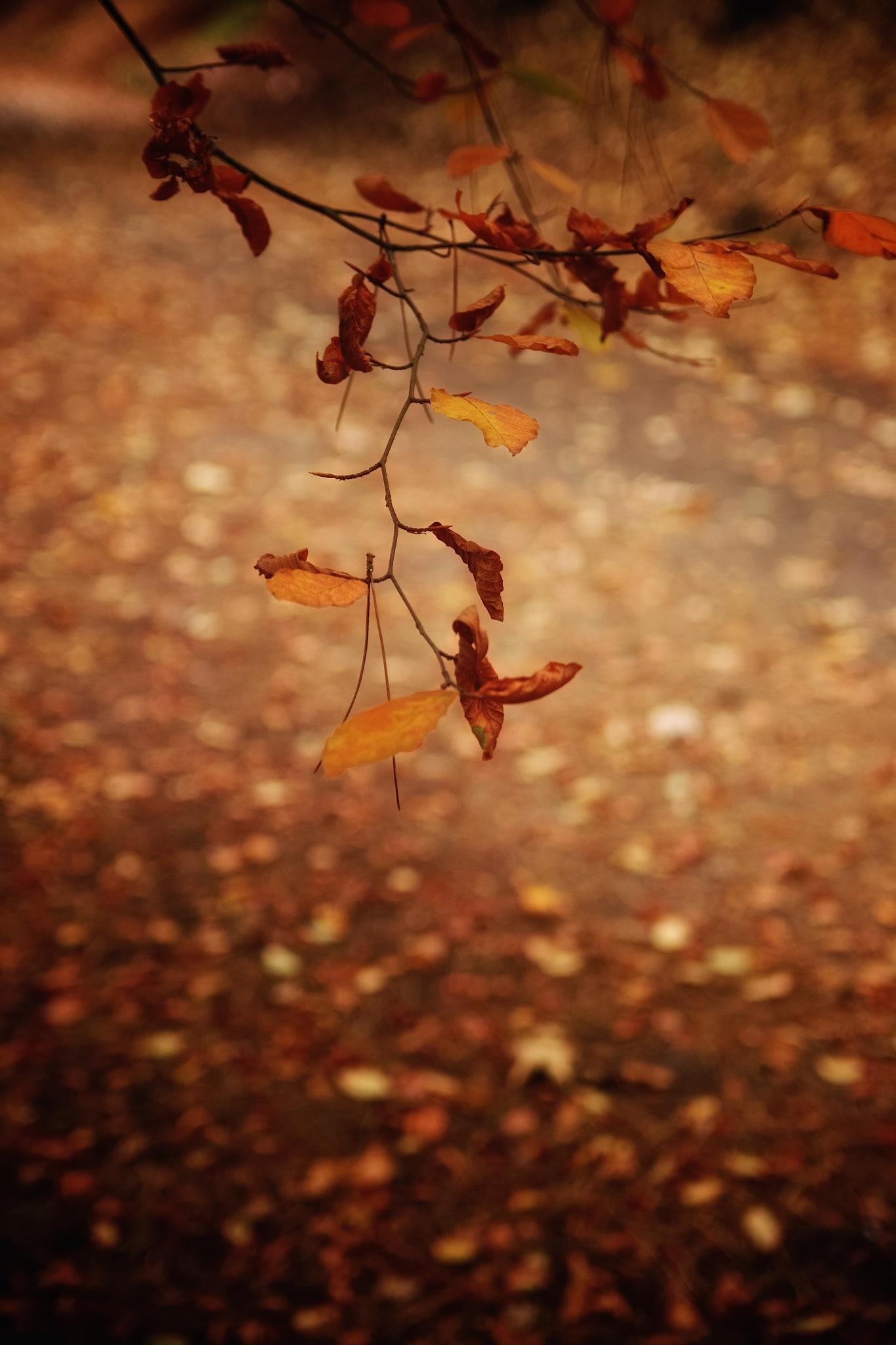 Late Autumn Glow  by dundeedavie